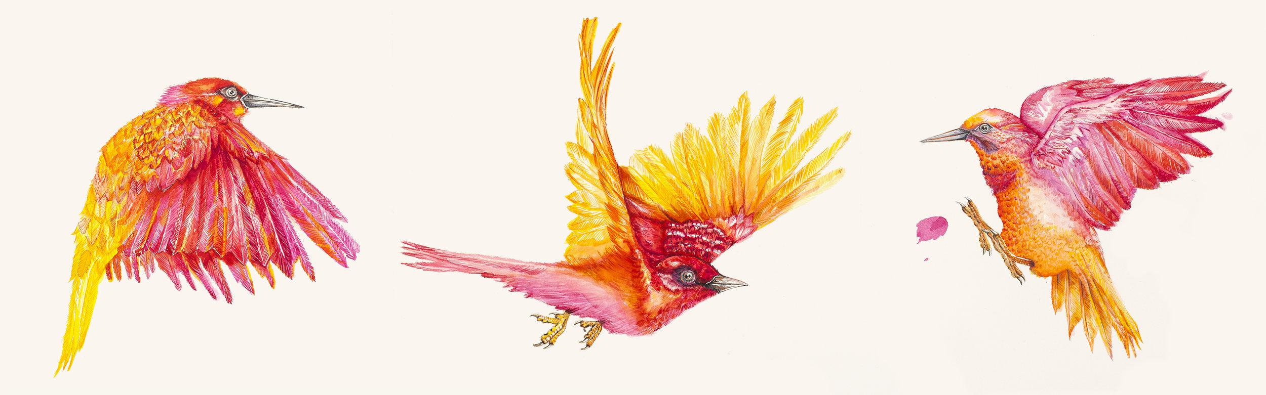estudo para estampa  pássaros de outono [aquarela e ecoline]