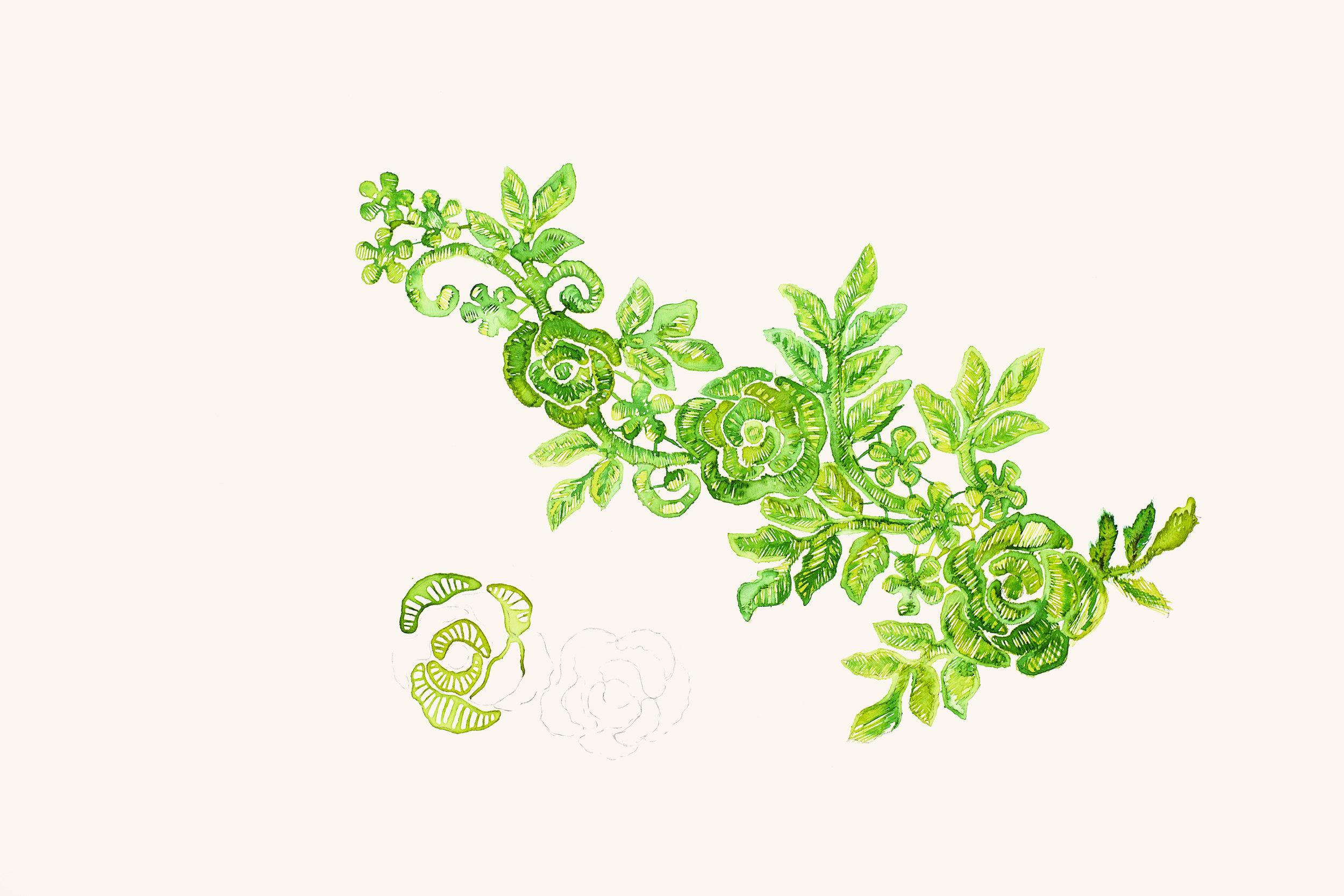 estudo para estampa   botânica  [  aquarela e ecoline]