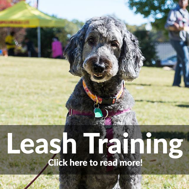 Leash Reactivity and Training