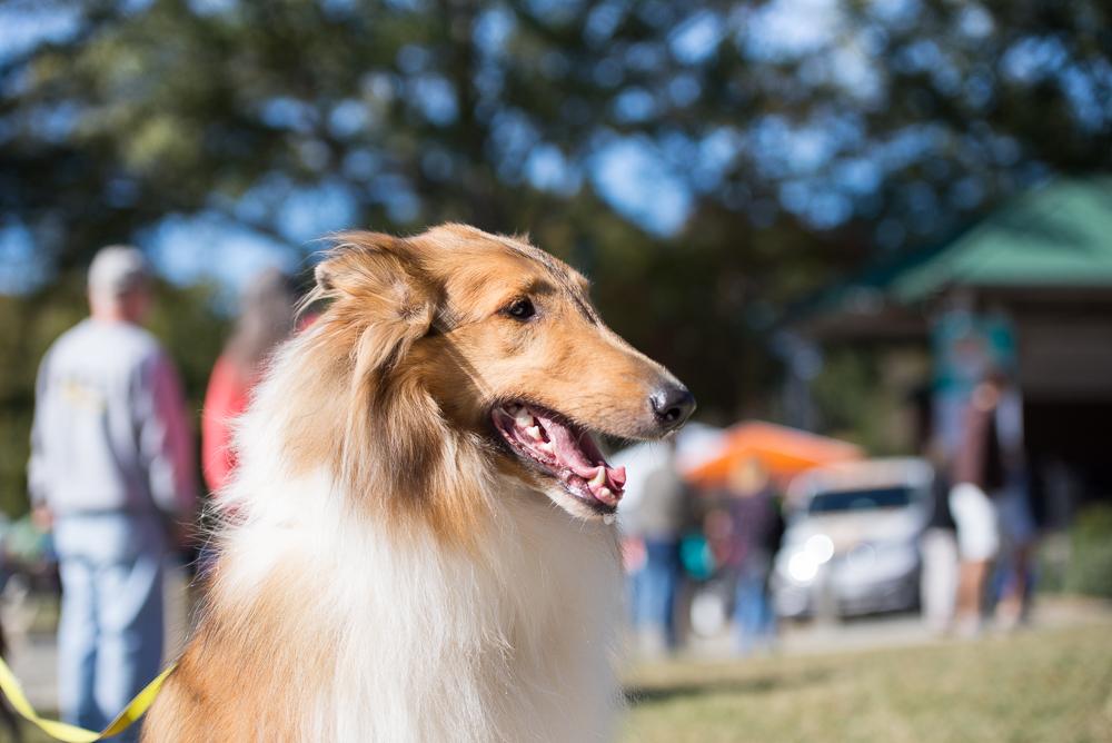 charlotte-dog-training