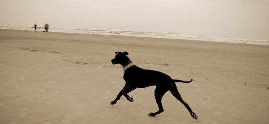Off Leash Dog Training Means Freedom To Enjoy