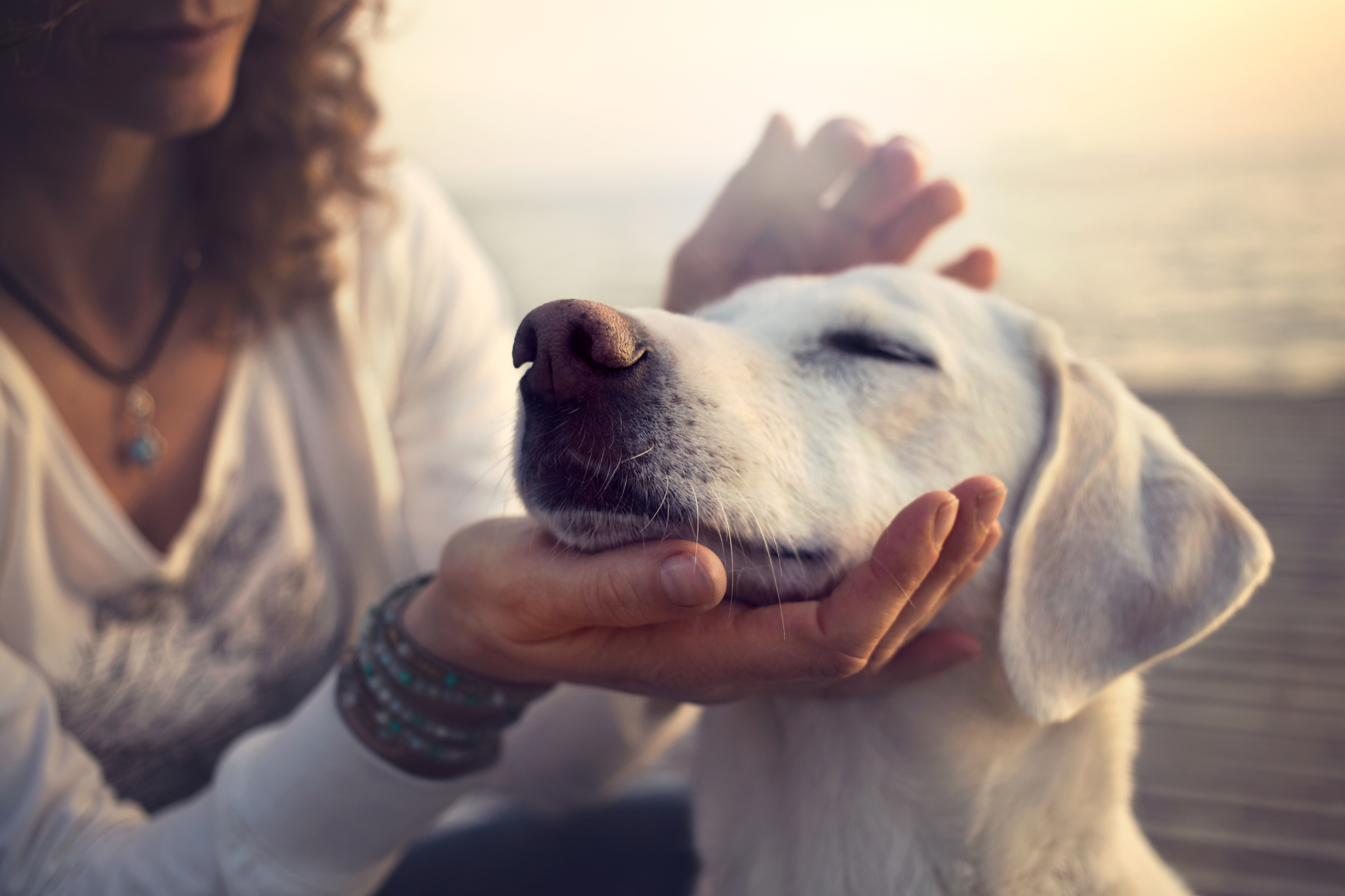 Animal Reiki -- Healing Touch for Animals