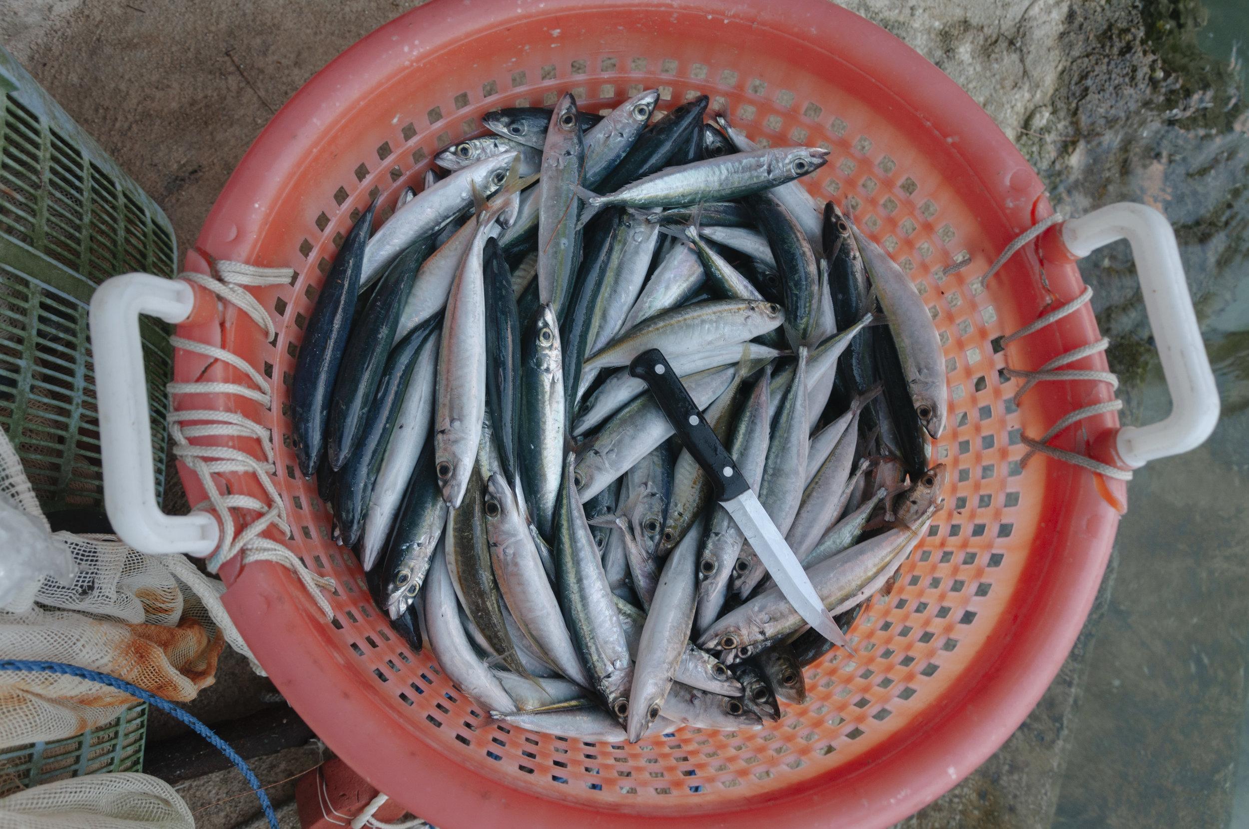 FianderFoto_Fishing_074.JPG