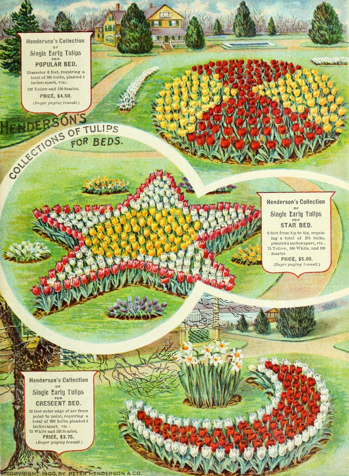 From Peter Henderson & Co., 1900. A perfect example of the trendy marketing that sprung from the popularity of the seed industry.