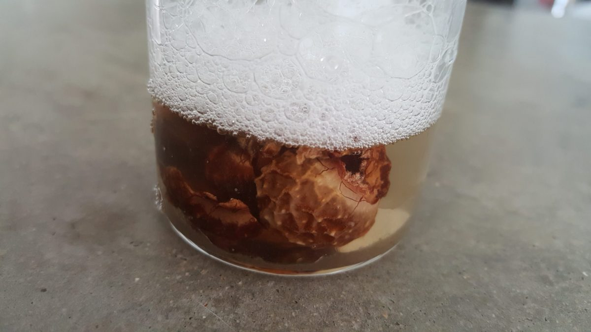 An image from Craftiviti of the nuts creating their soapy lather.
