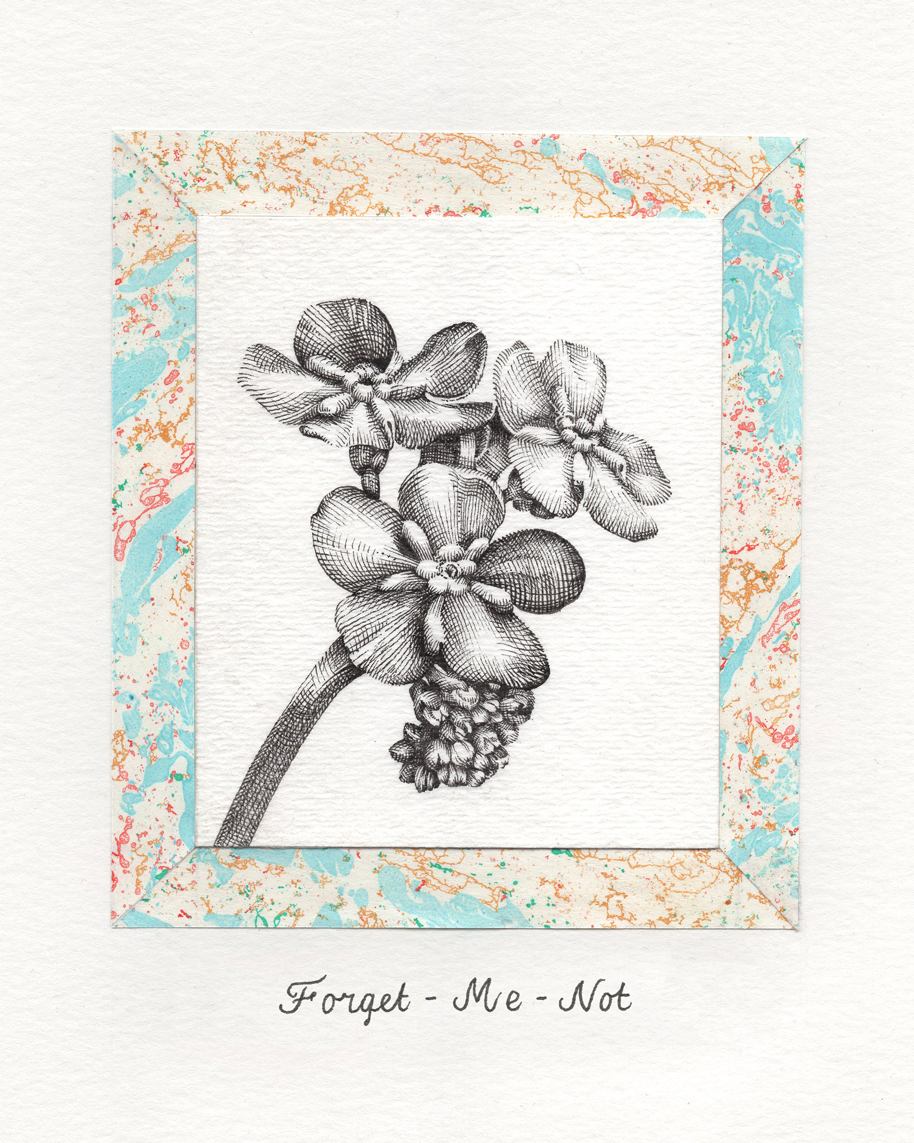 Forget Me Not 4 x 5.jpg