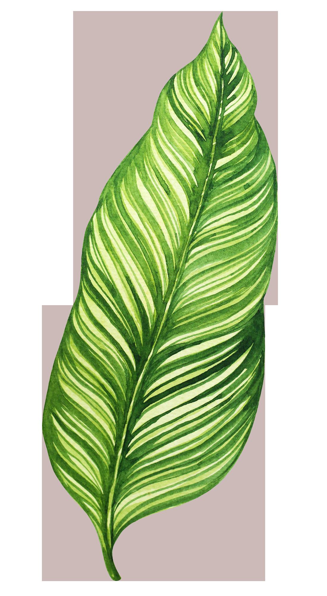leaf8.png