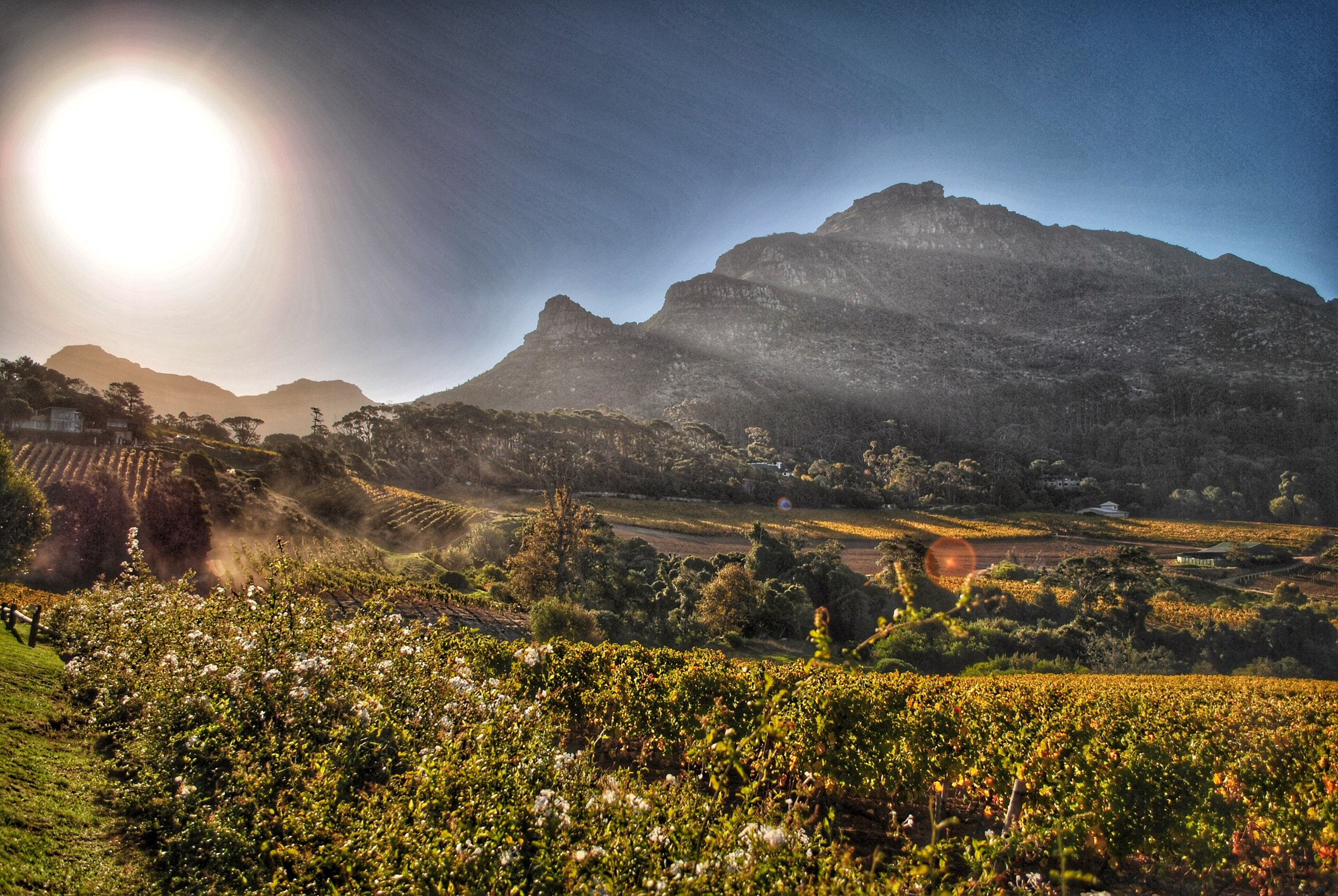 Constantia Glen Vineyards