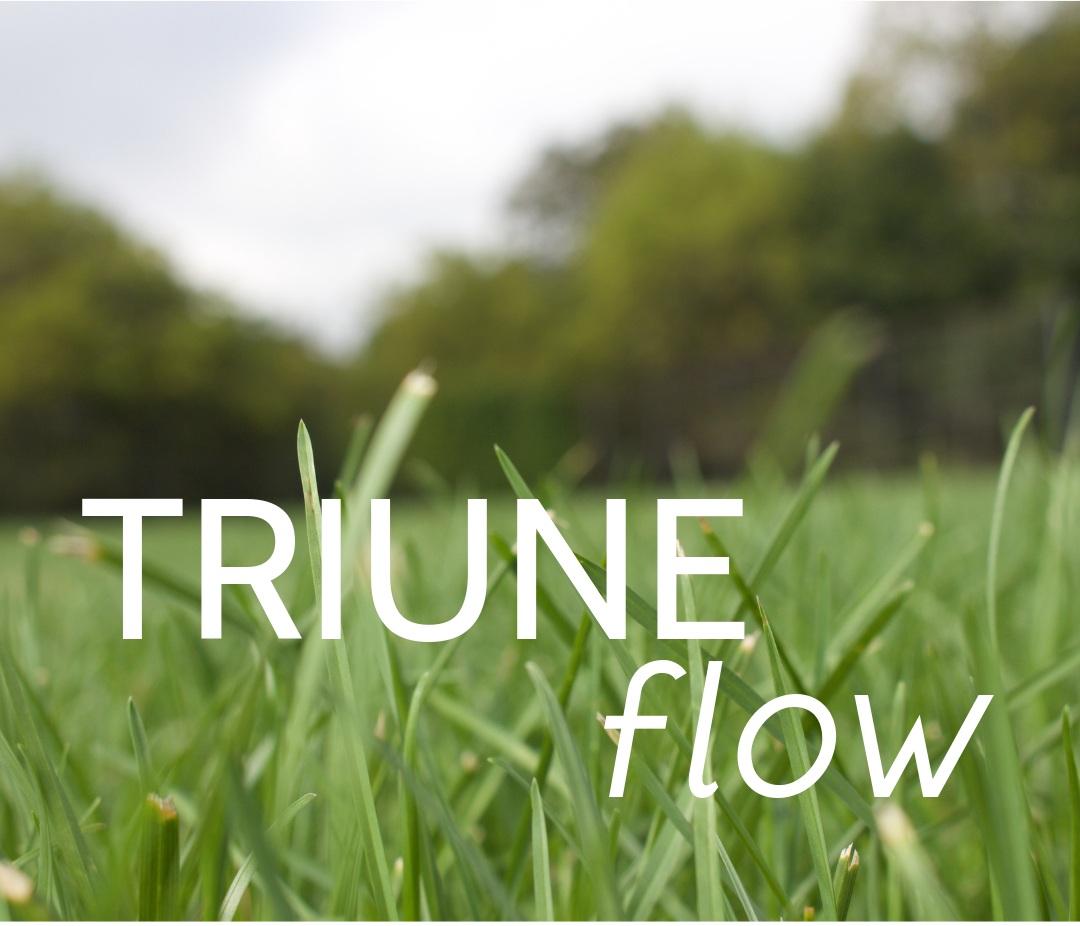 TRIUNE+Flyer.jpg