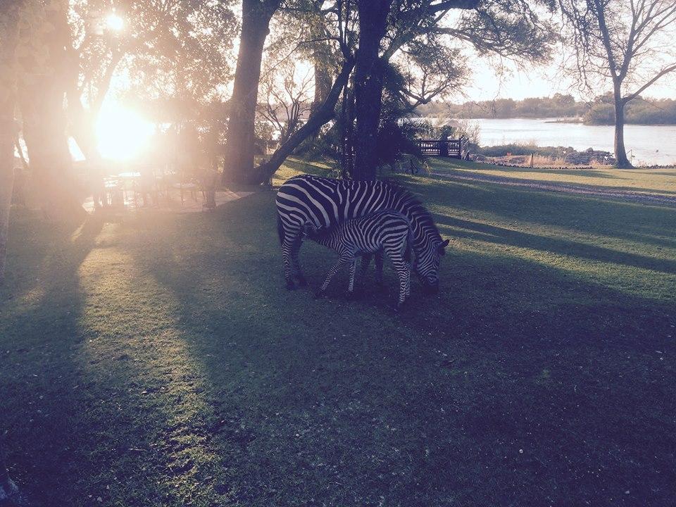 Taken at Royal Livingstone Resort in Zambia