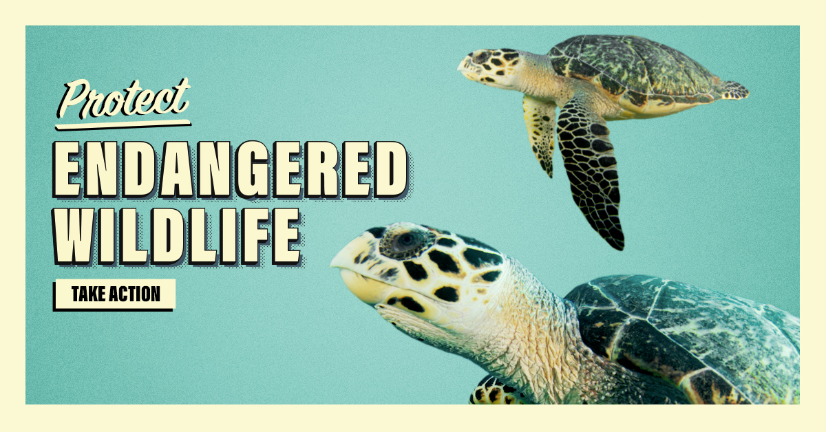 protect_nc_wildlife_1.jpg