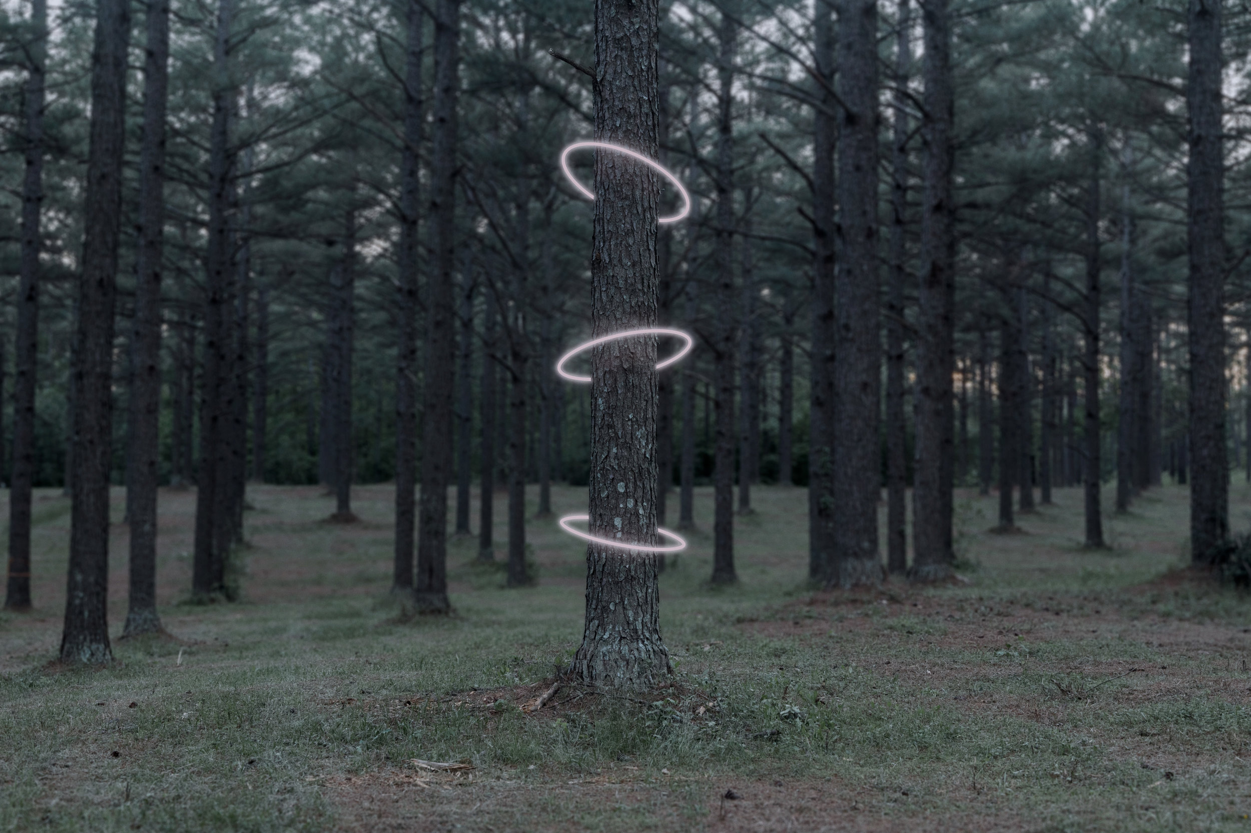 rings_around_tree.jpg