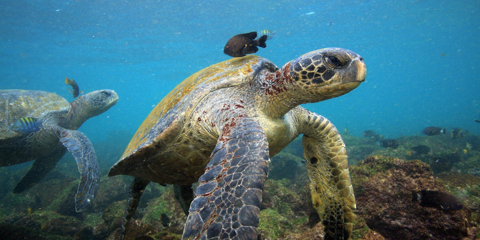 galapagos-island-yoga-retreat.jpg