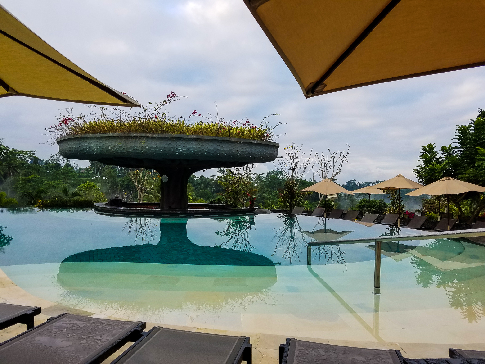 This is the beautifully designed swim up bar with a garden on top.