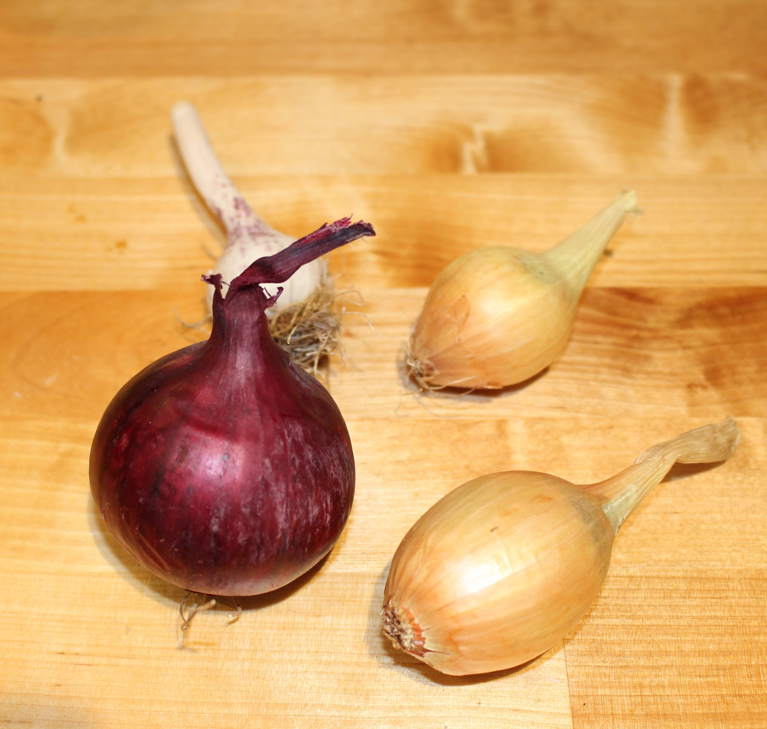 Garlic, Shallots & Red Onions all from my dad's garden