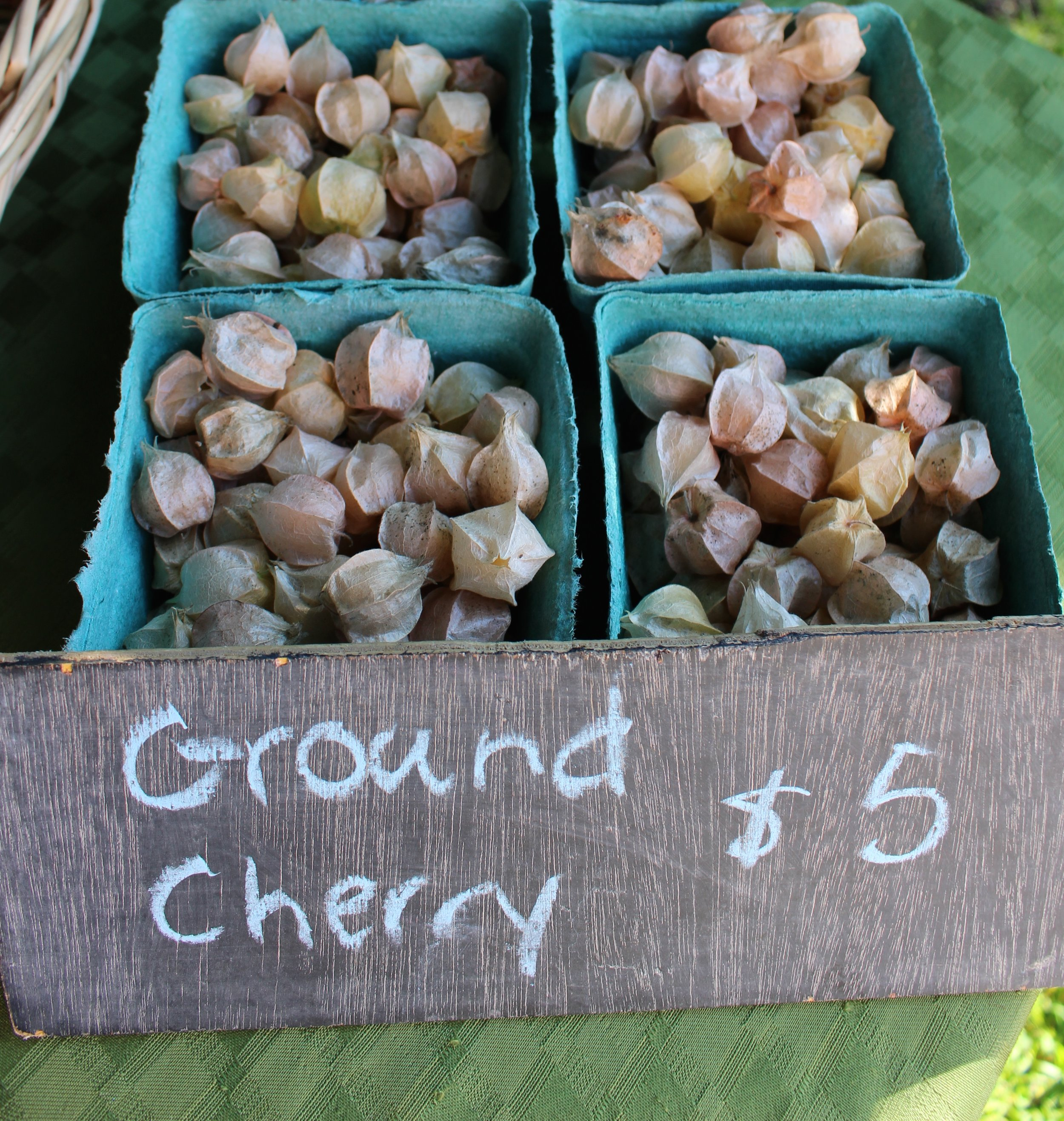 I had never seen ground cherries before!