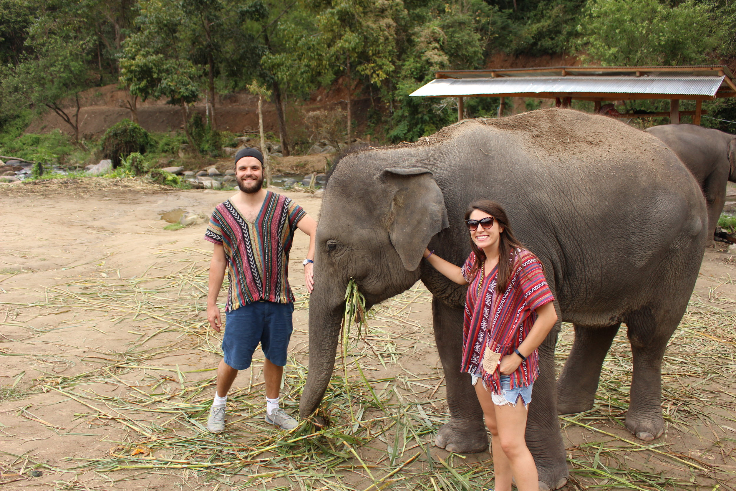 T & Phil with one of the elephants munching on bamboo leaves
