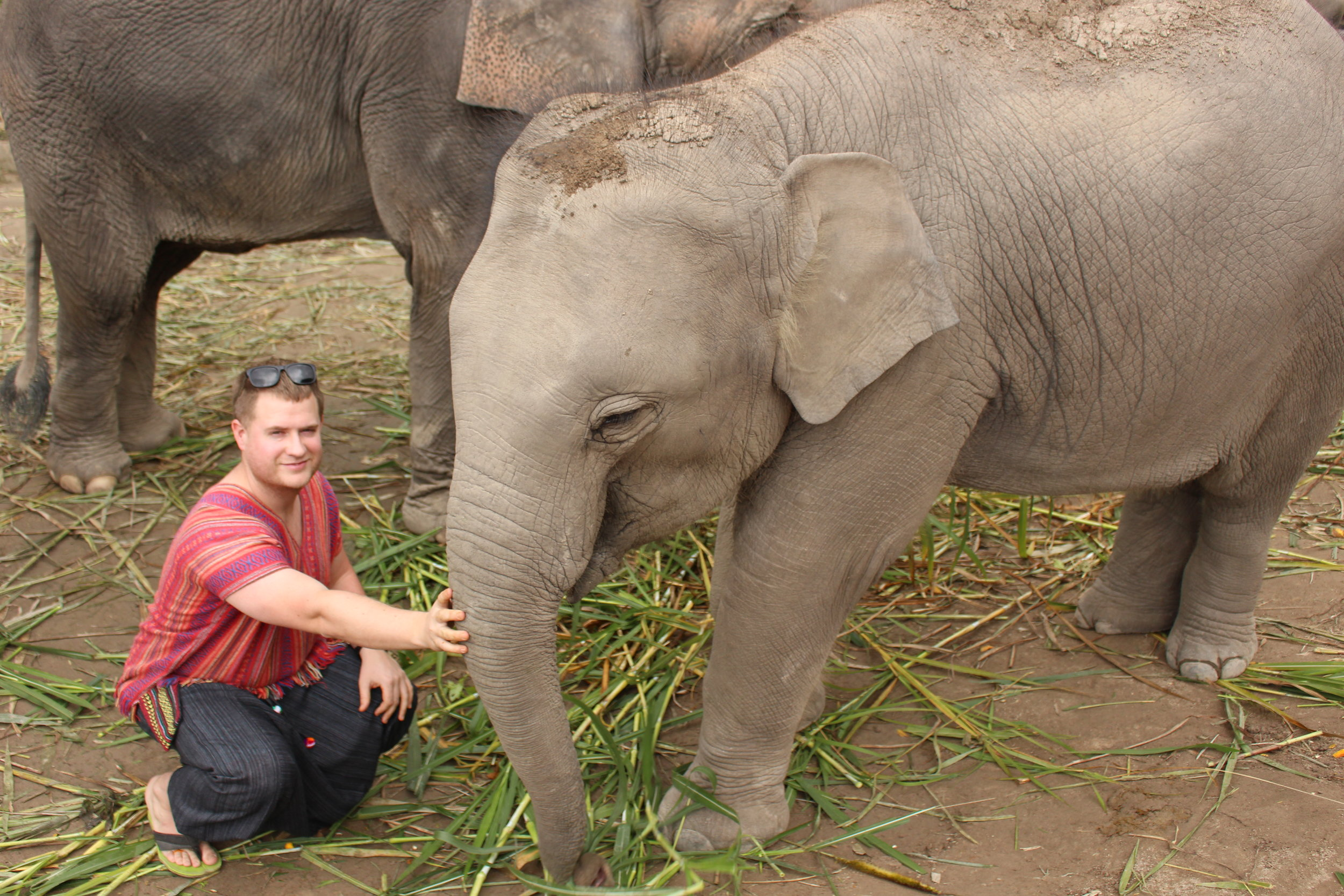 Dave with the youngest elephant