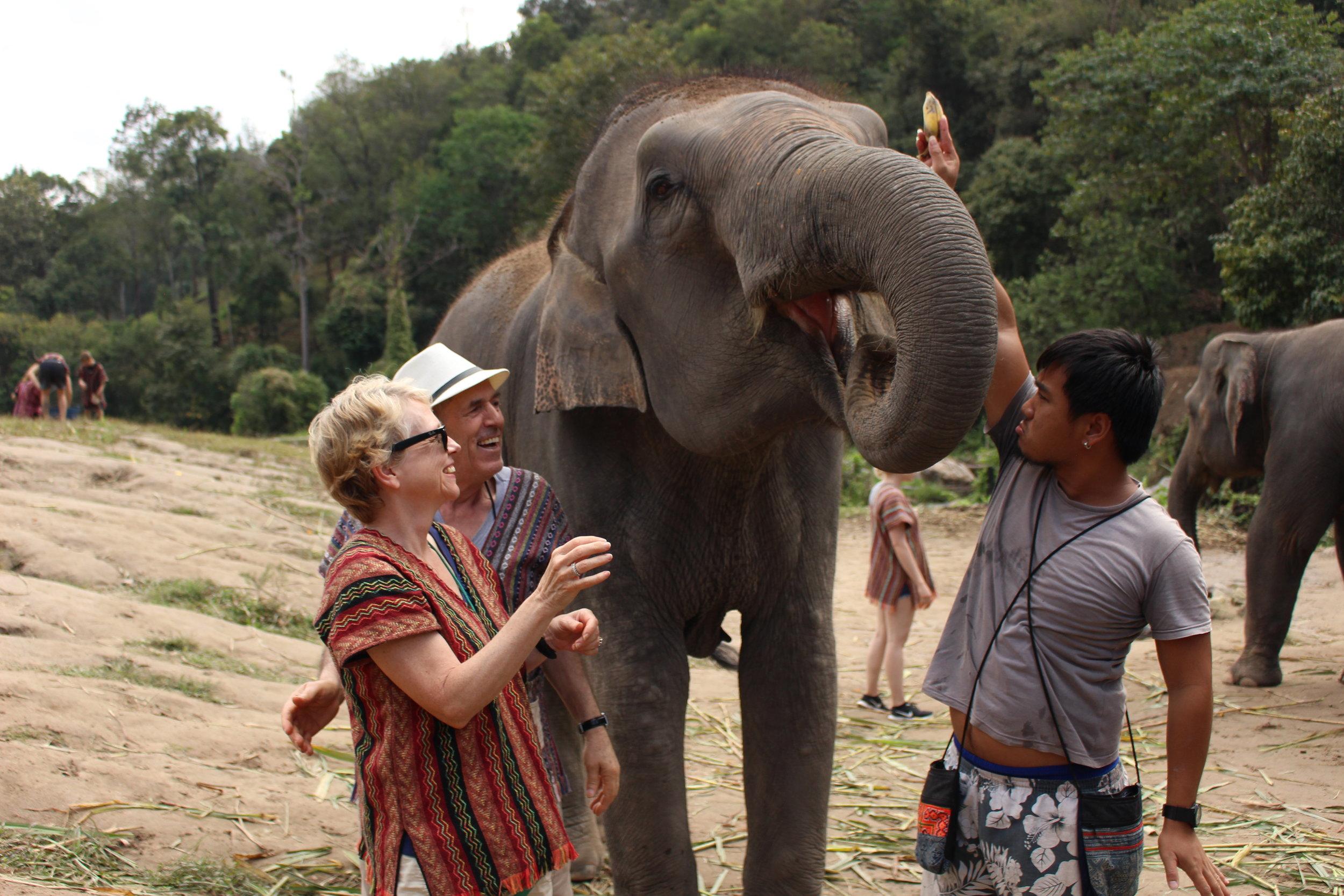 My mum and dad enjoying feeding the elephants