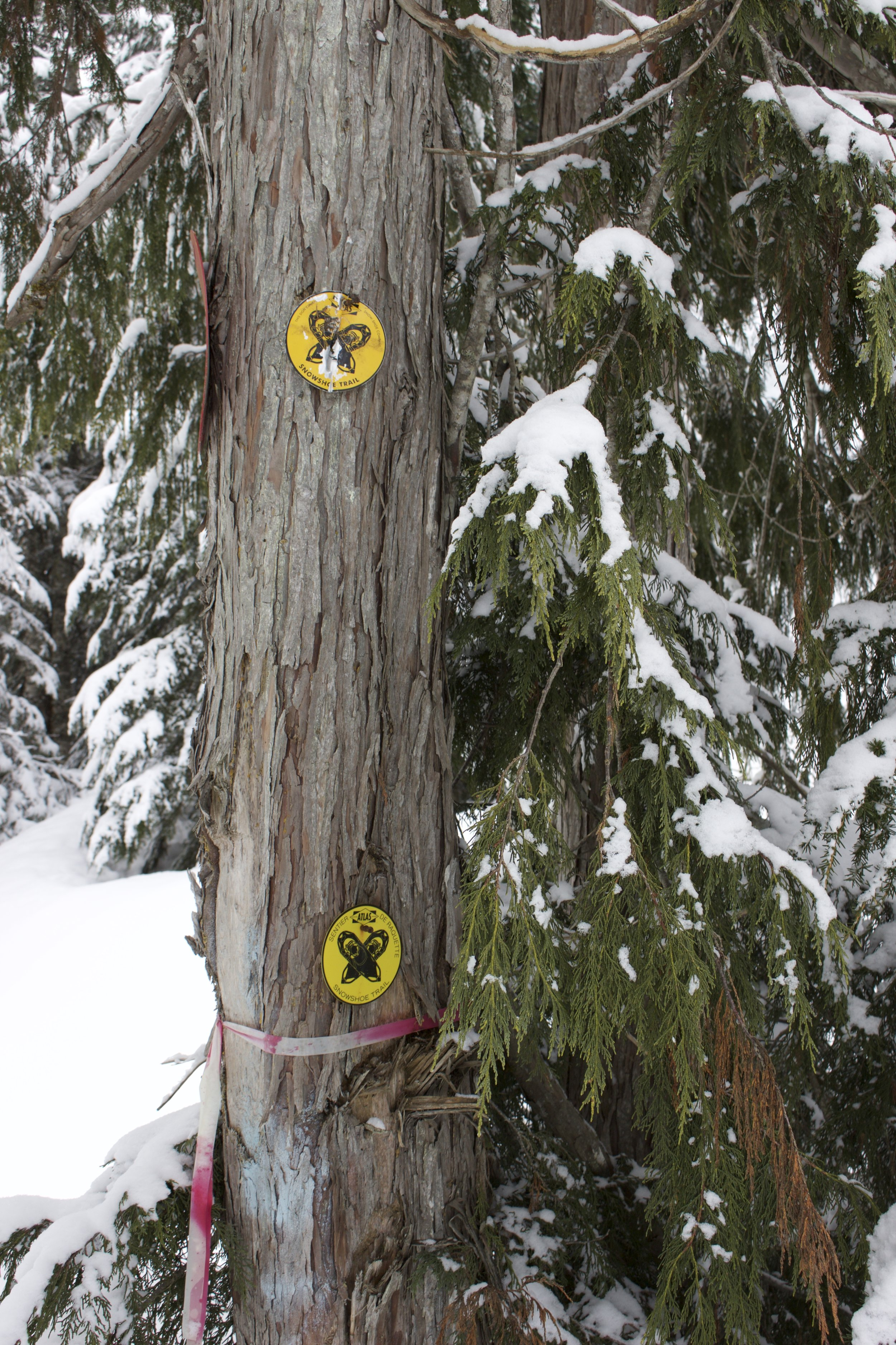 Markers on the trail