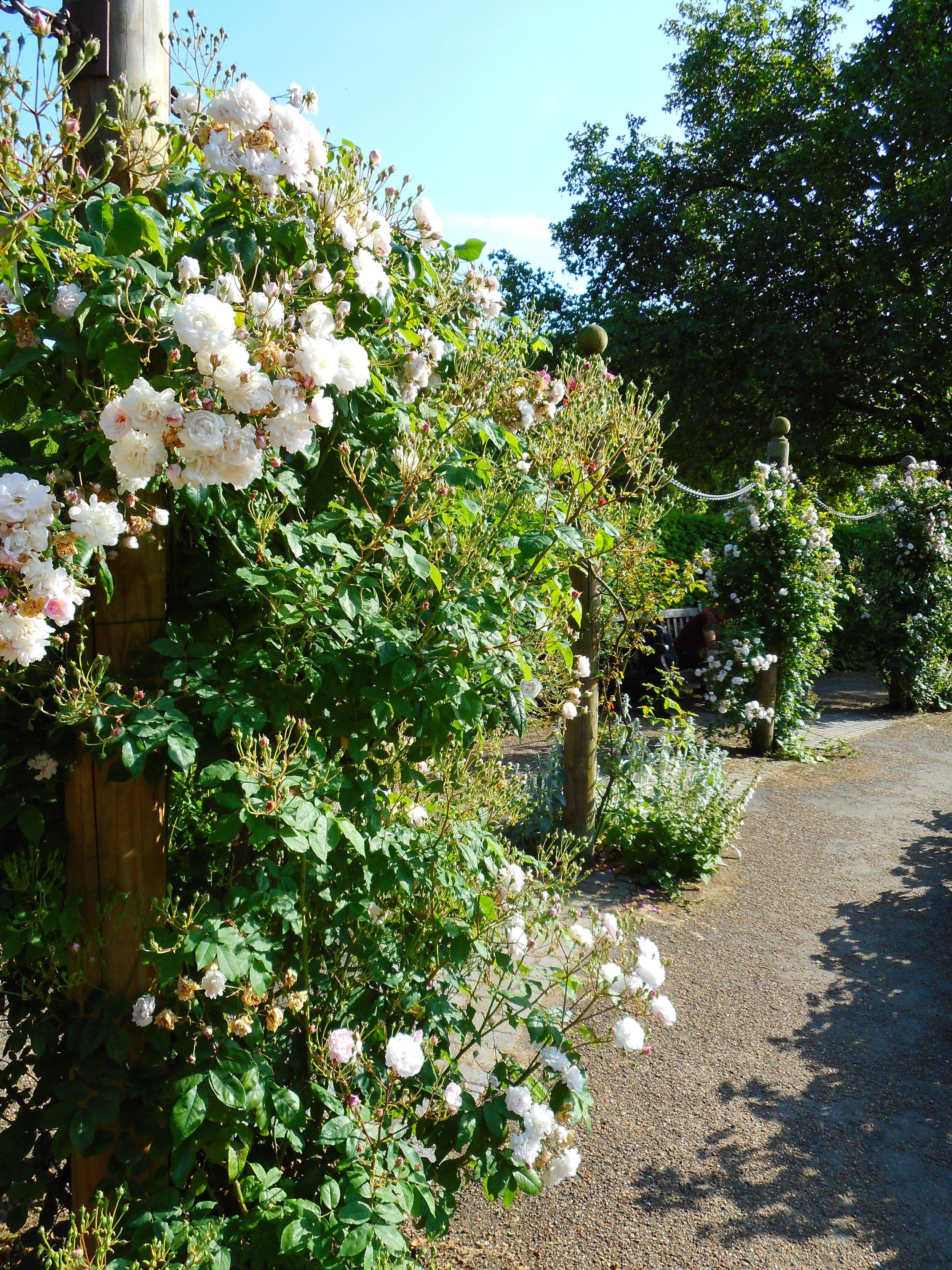 Walking through Kensington Garden