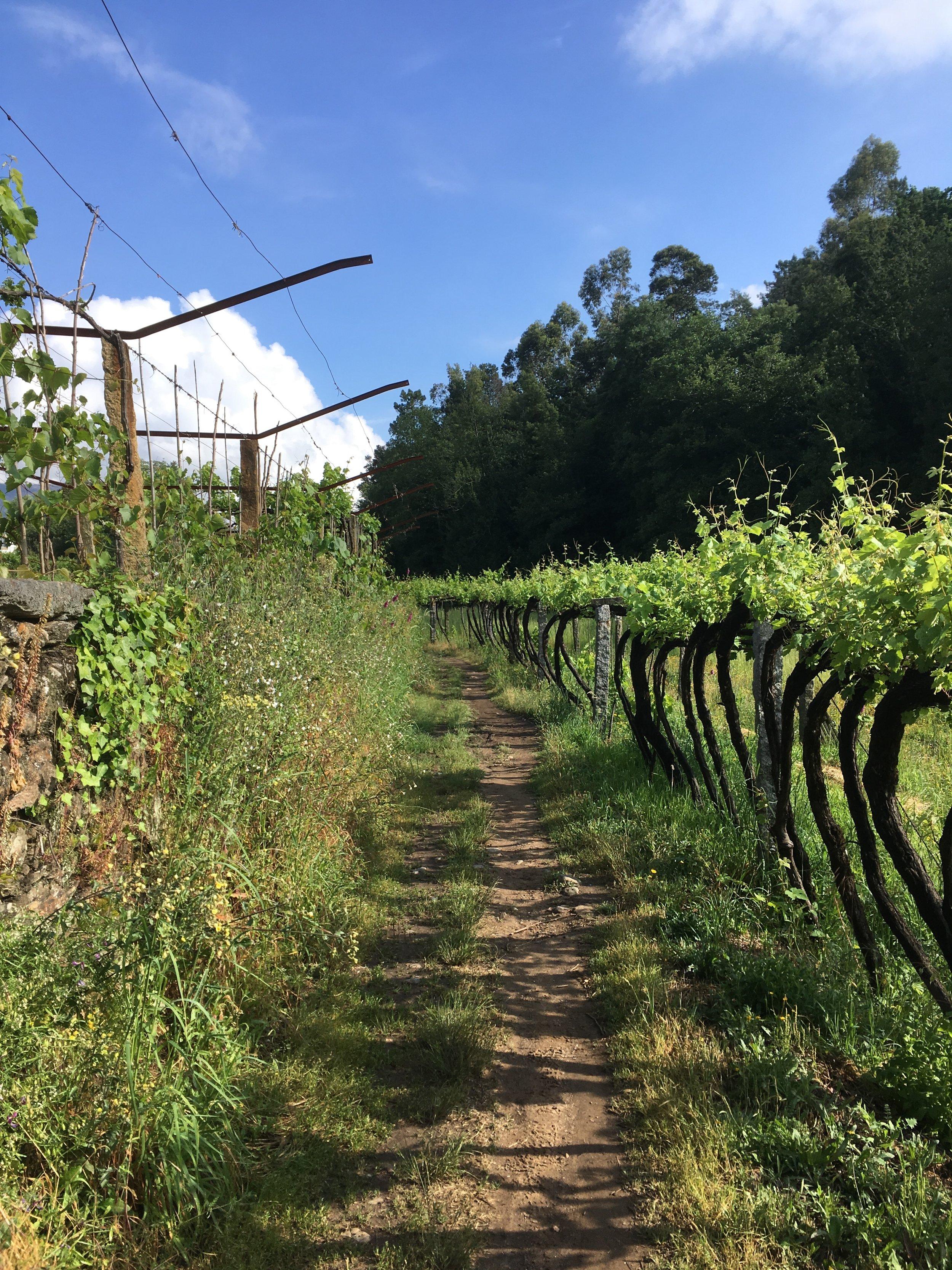 Vineyards everywhere we looked!