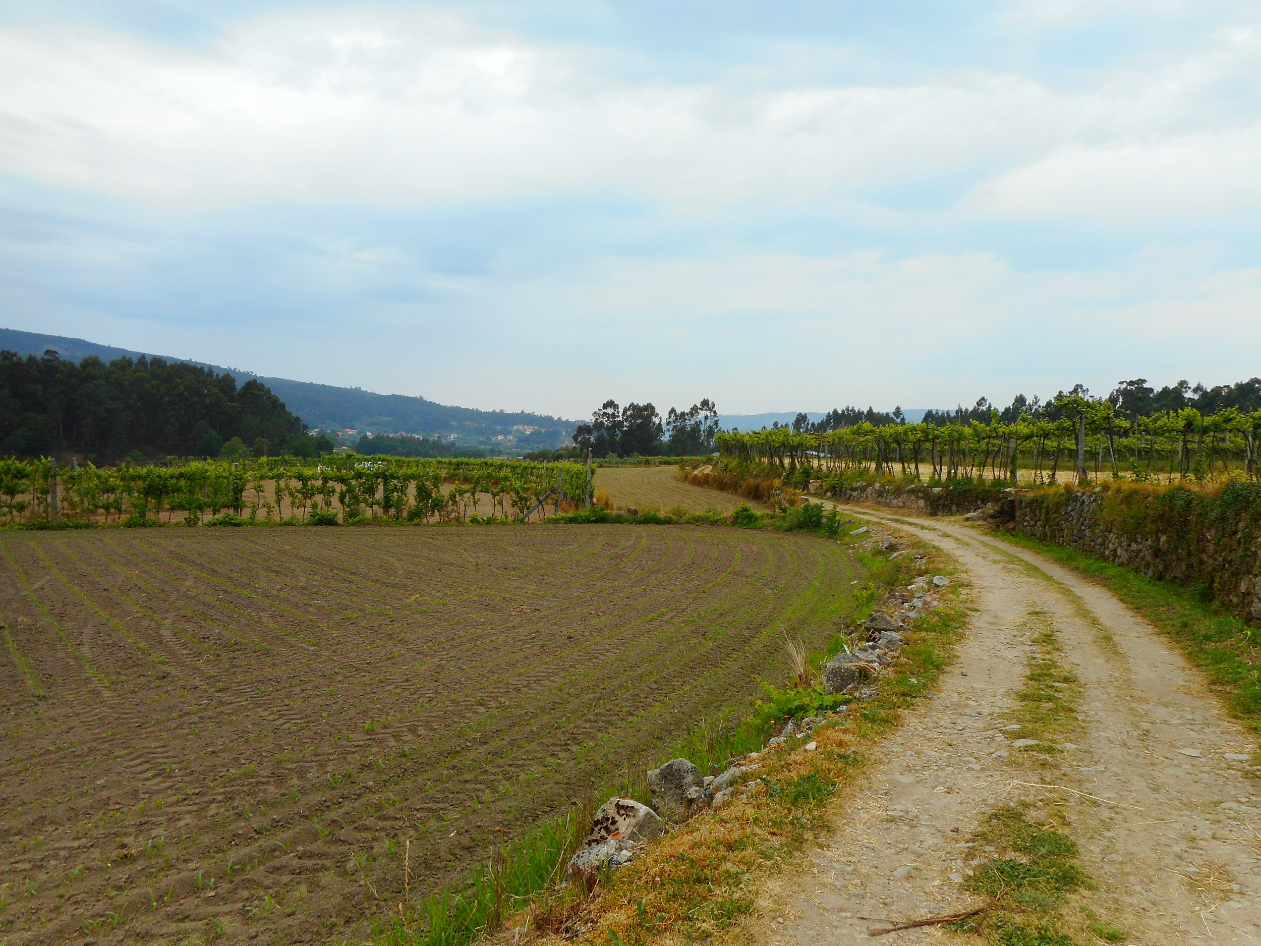 Walking through farmland and vineyards