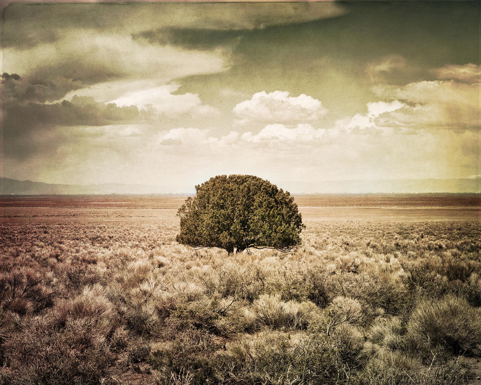 Jim_Sincock-Lone_Tree.jpg