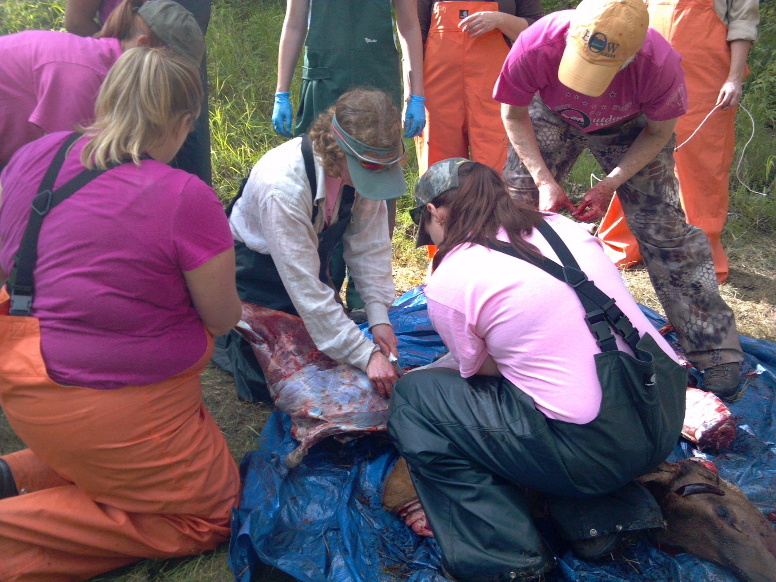 Alaska Becoming an Outdoors Woman Field Dressing Course