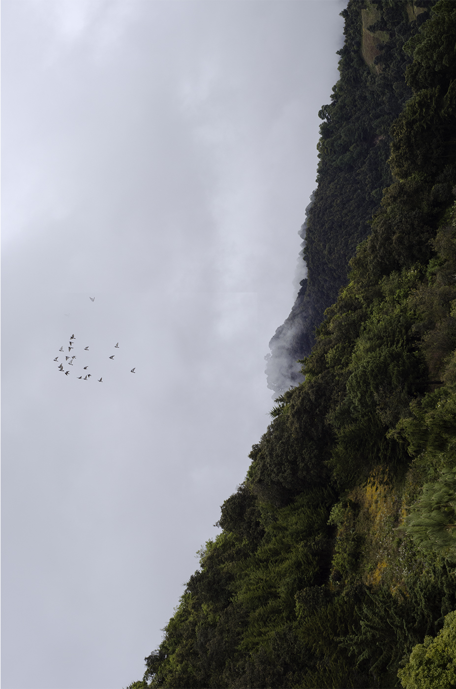 MontañaVerdeCintiaDuran.jpg