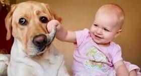 赤ちゃんと犬.jpg