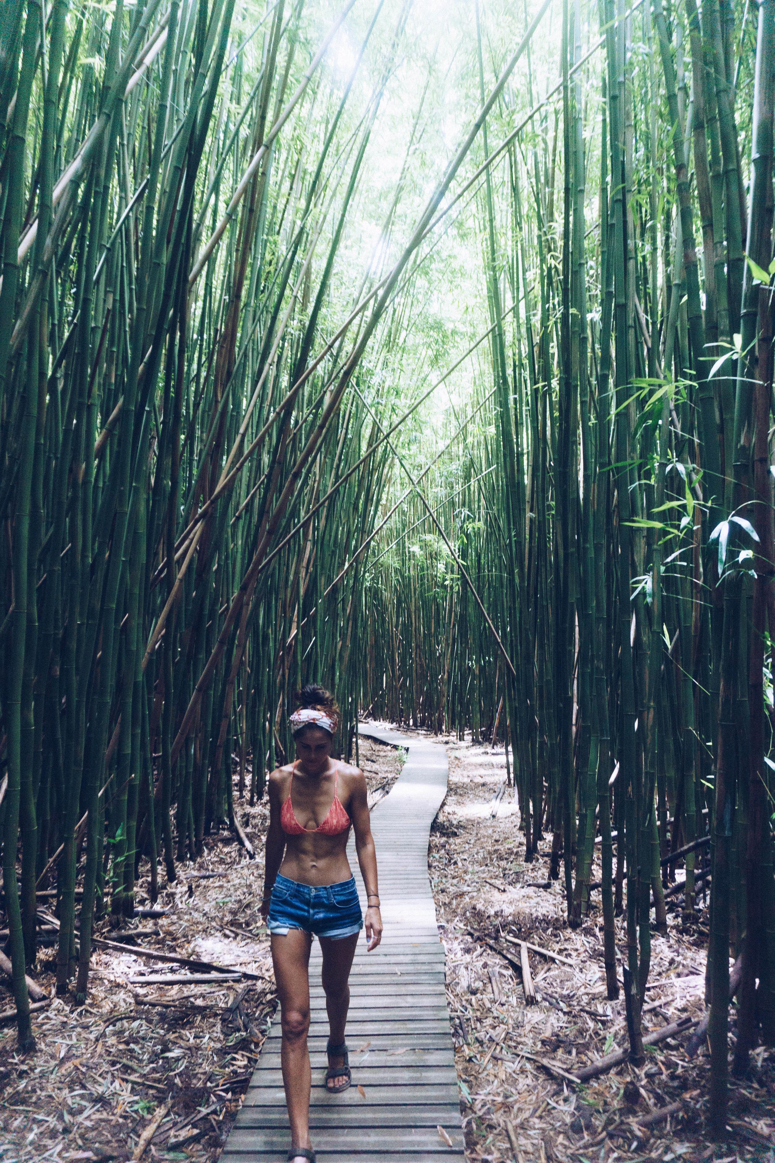 The  PIPIWAI TRAIL  through the bamboo bushes to  WAIMOKU FALLS.