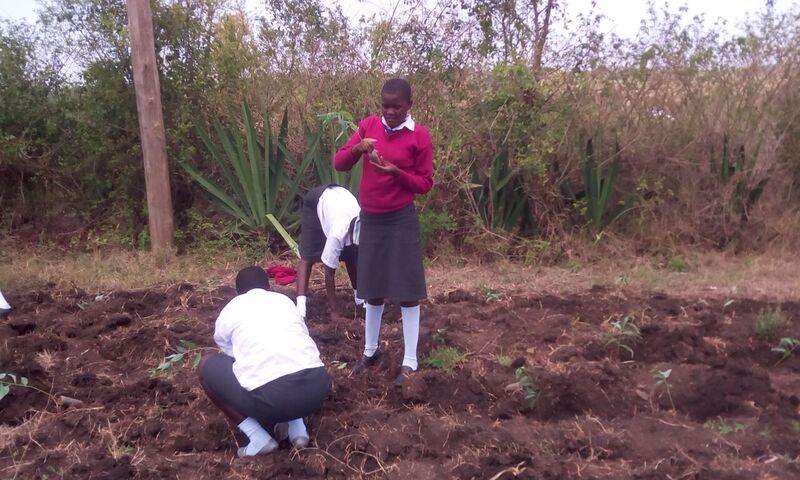 Alara Secondary School pupils planting seedlings