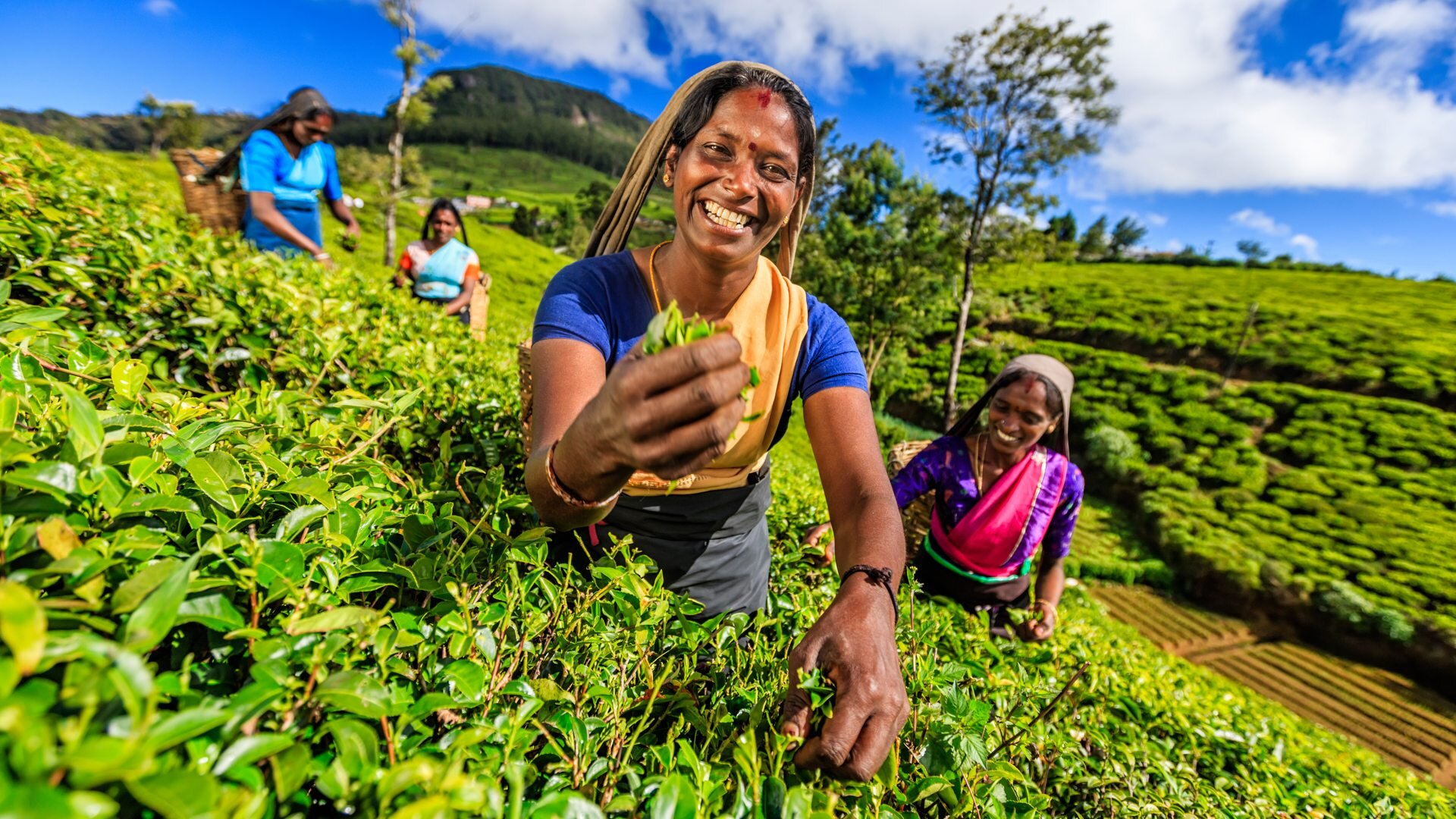 sri-lanka-hill-country-hatton-tea-plantation.jpg