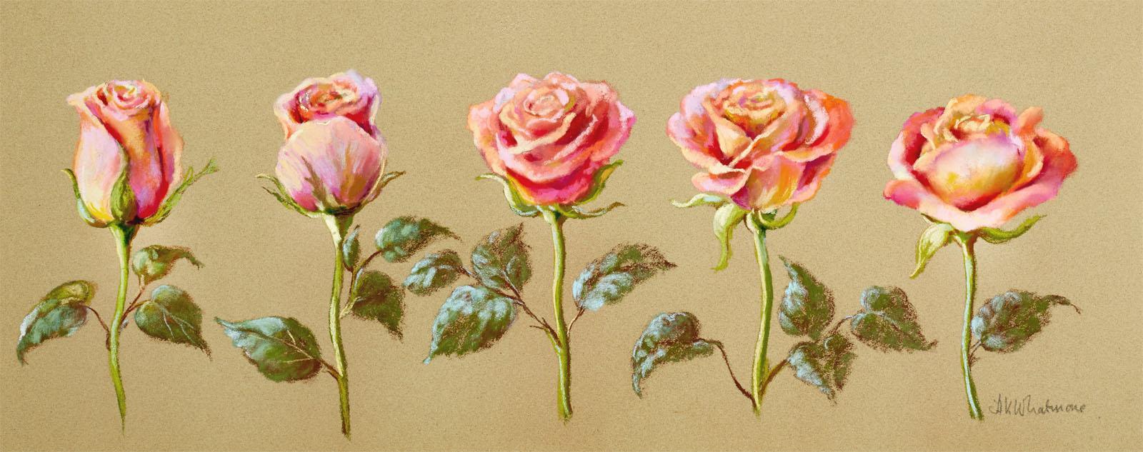 N2352 Rose Bud.jpg