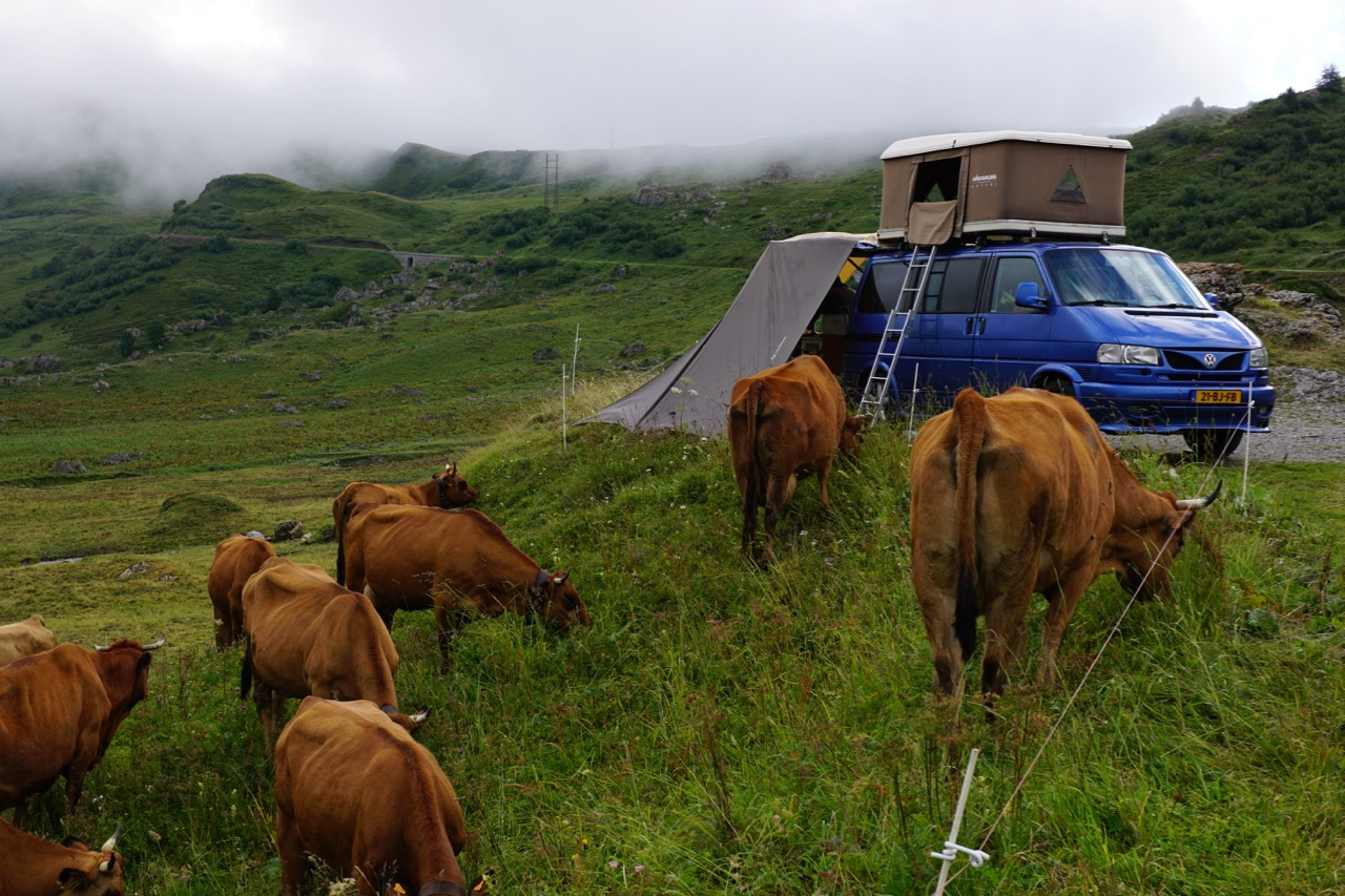 Waking up on the roof with cows
