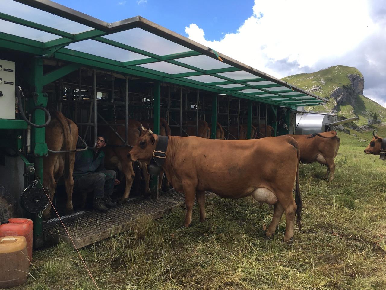 Portable Milking Station