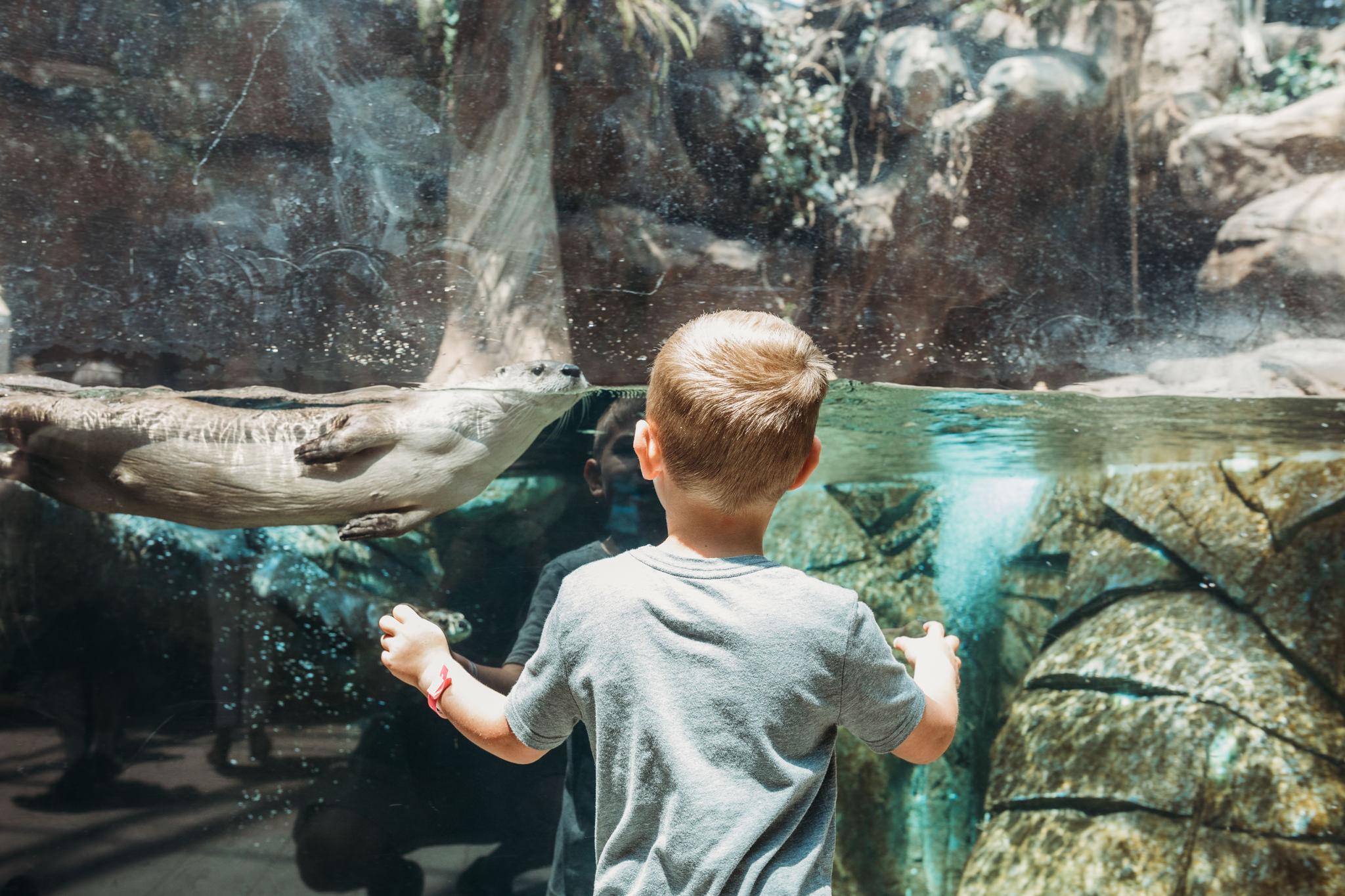 Downtown Aquarium Denver | Rural Life Photography | Mike Wade