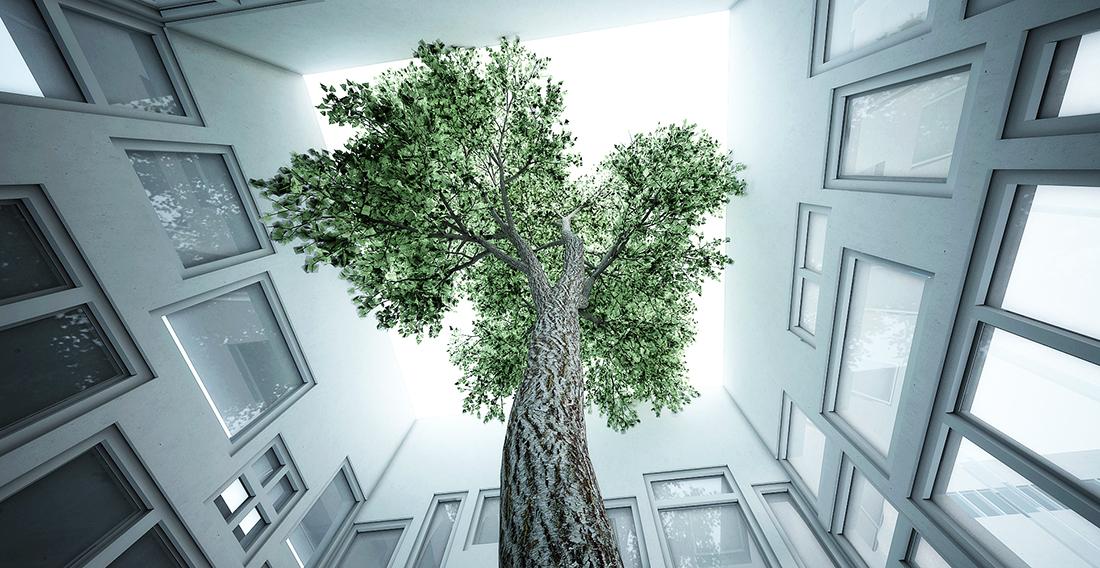 windows-showroom-tree.jpg