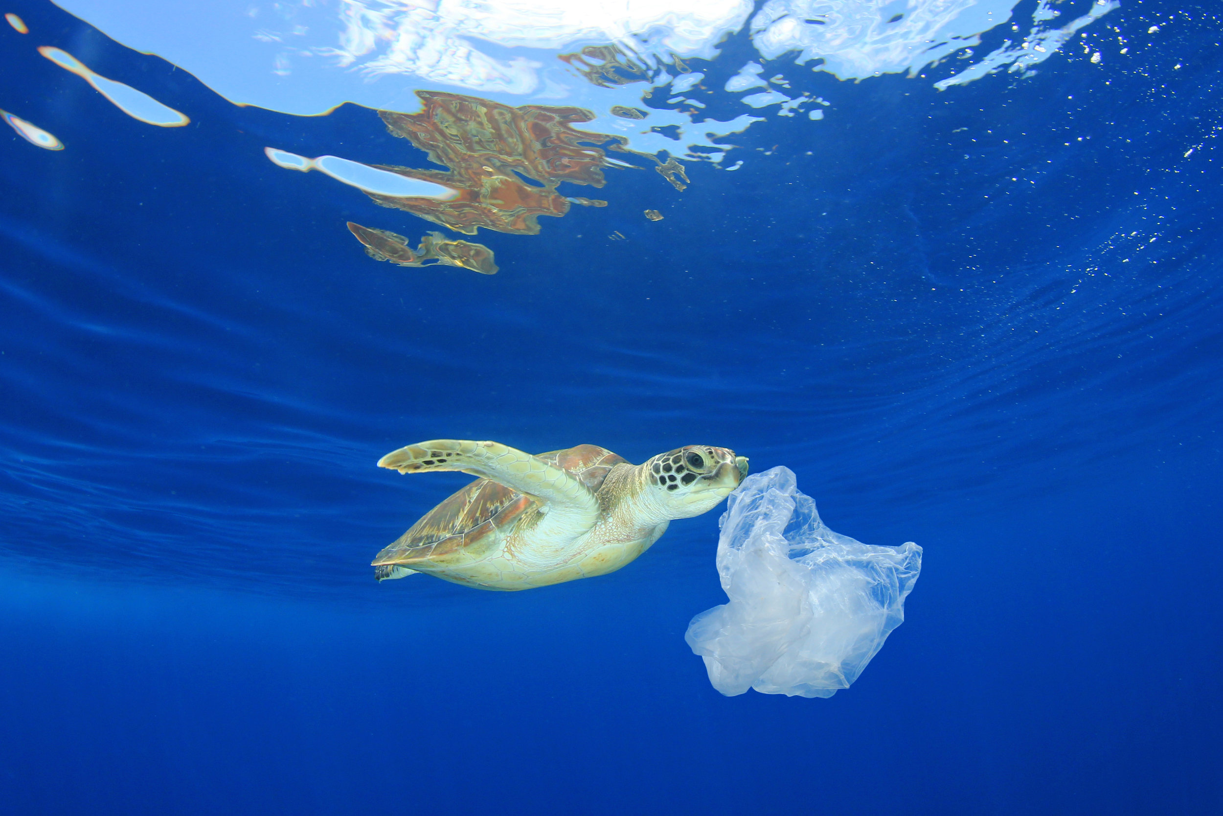 easy steps to reduce plastic use to protect environment oceans wildlife plastic-free