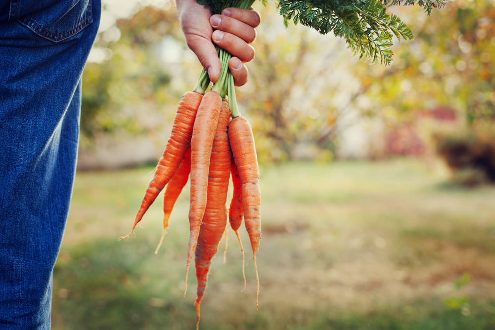should we eat organic foods benefits of organic food vegan nutrition nutritionist