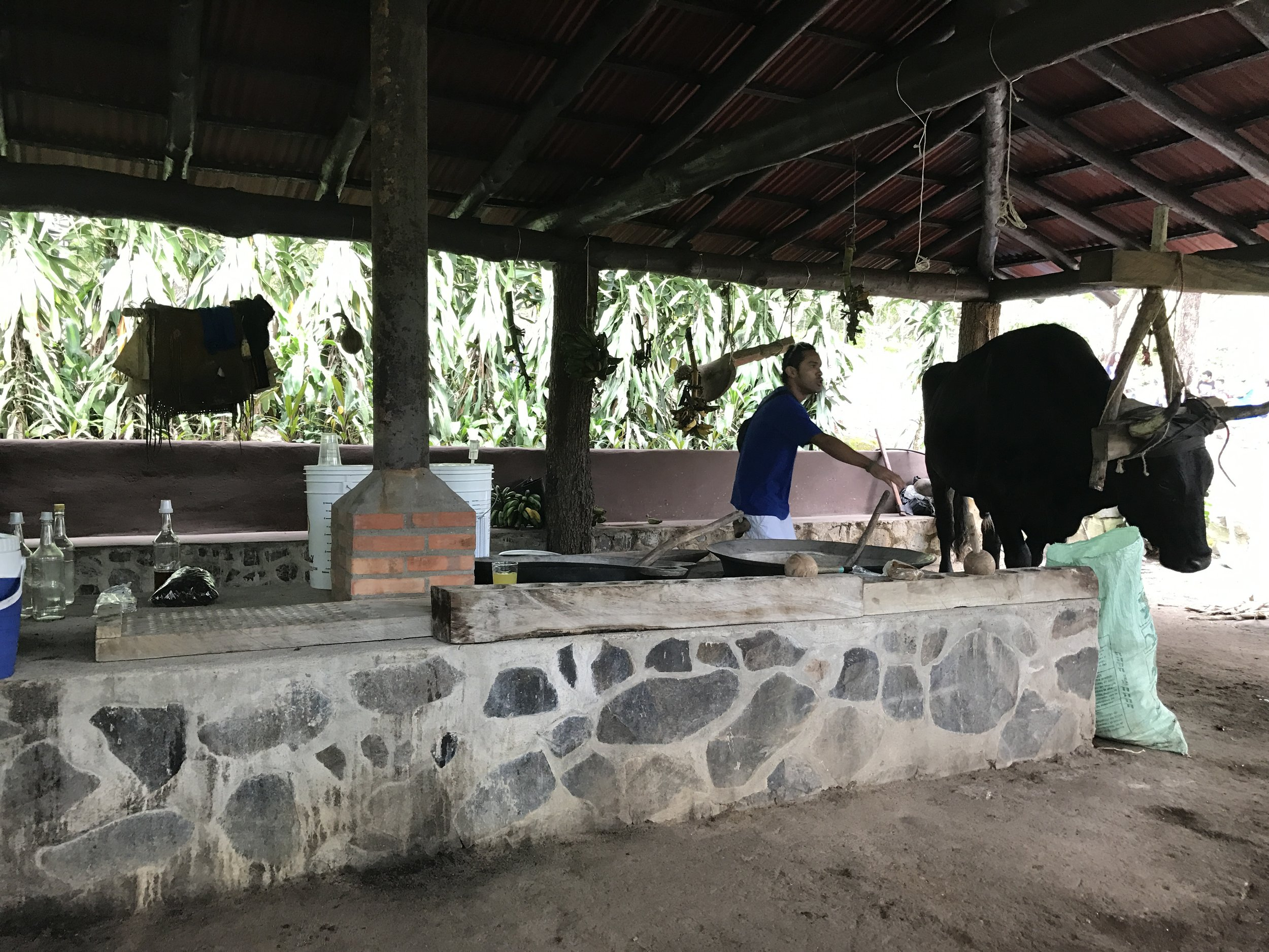 A sugar cane lesson in an authentic Costa Rican kitchen.