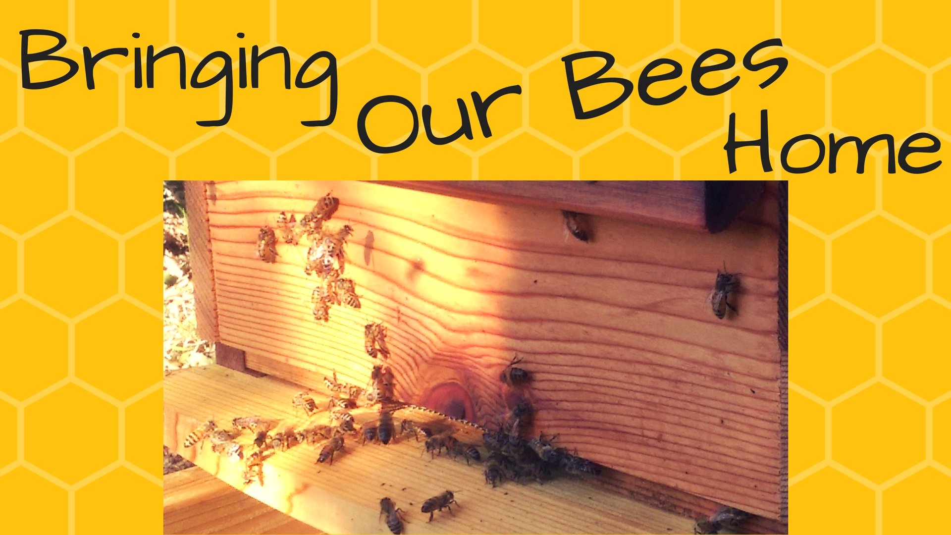 Bringing Our Bees Home.jpg