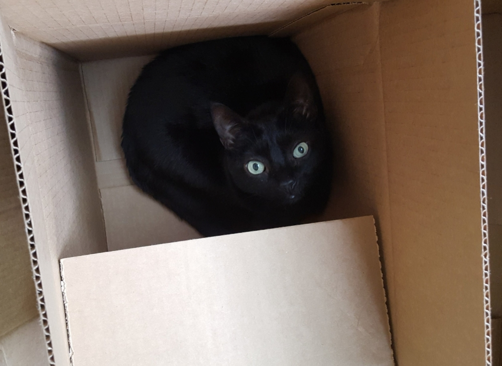 Unlimited boxes are a cat's favorite part of PCSing.