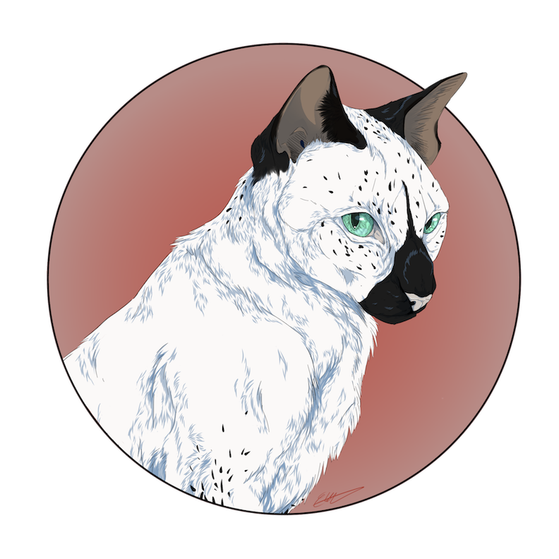 White Cat Drawing Art by Savourychaffinch