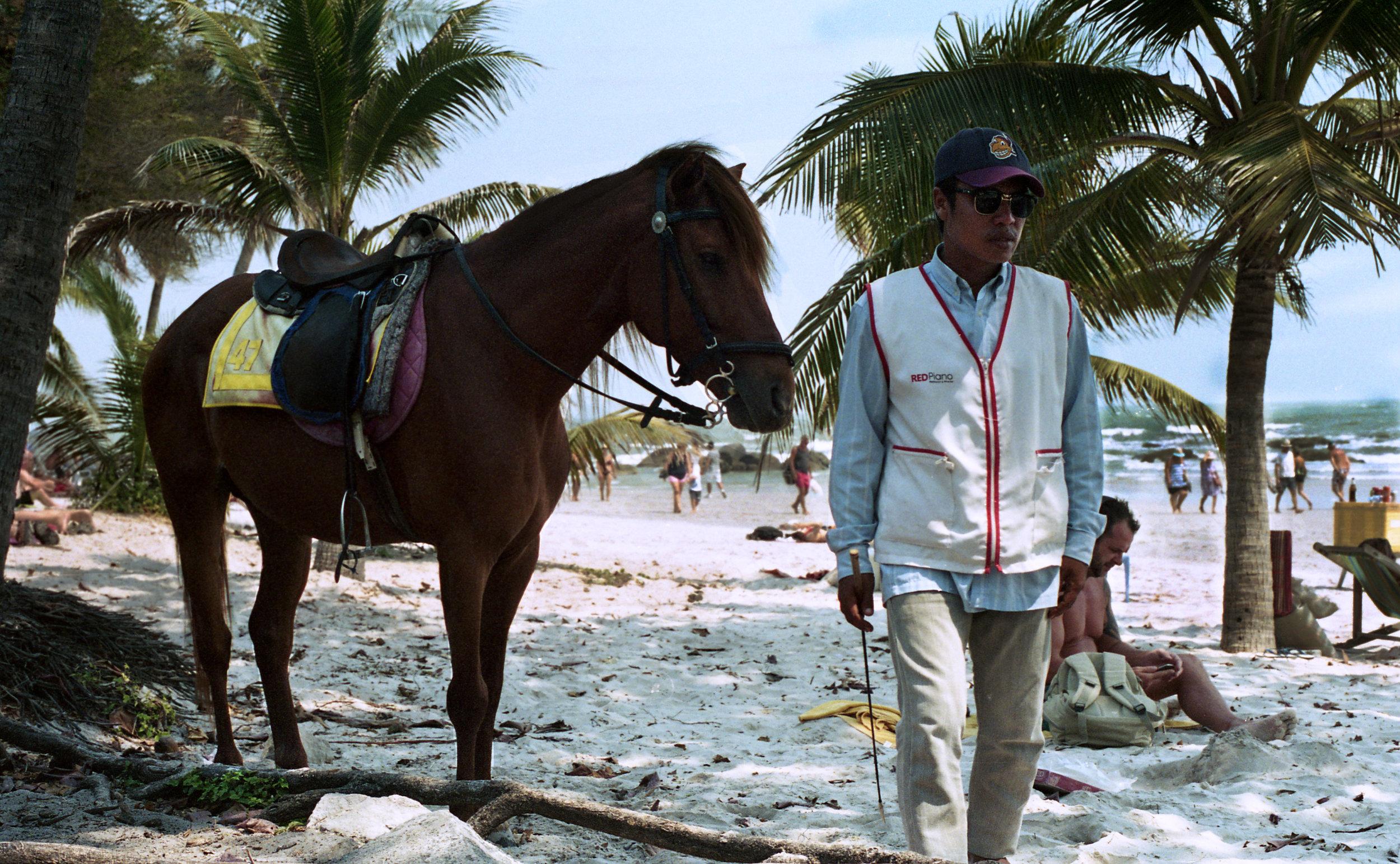 beachhorse.jpg