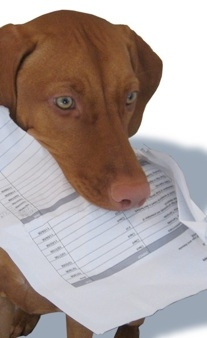 ...dog eat your homework?