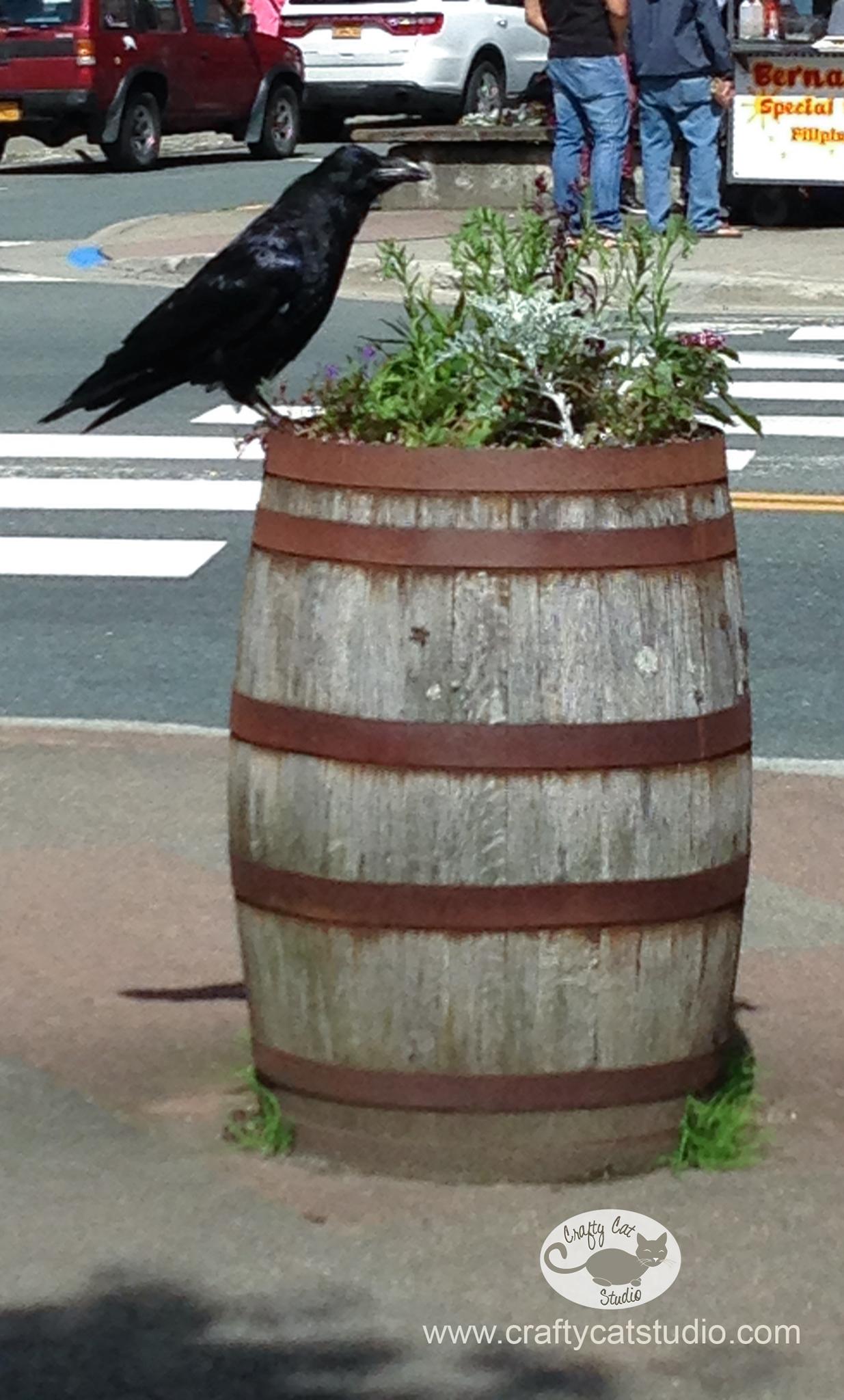 Juneau-Raven.jpg
