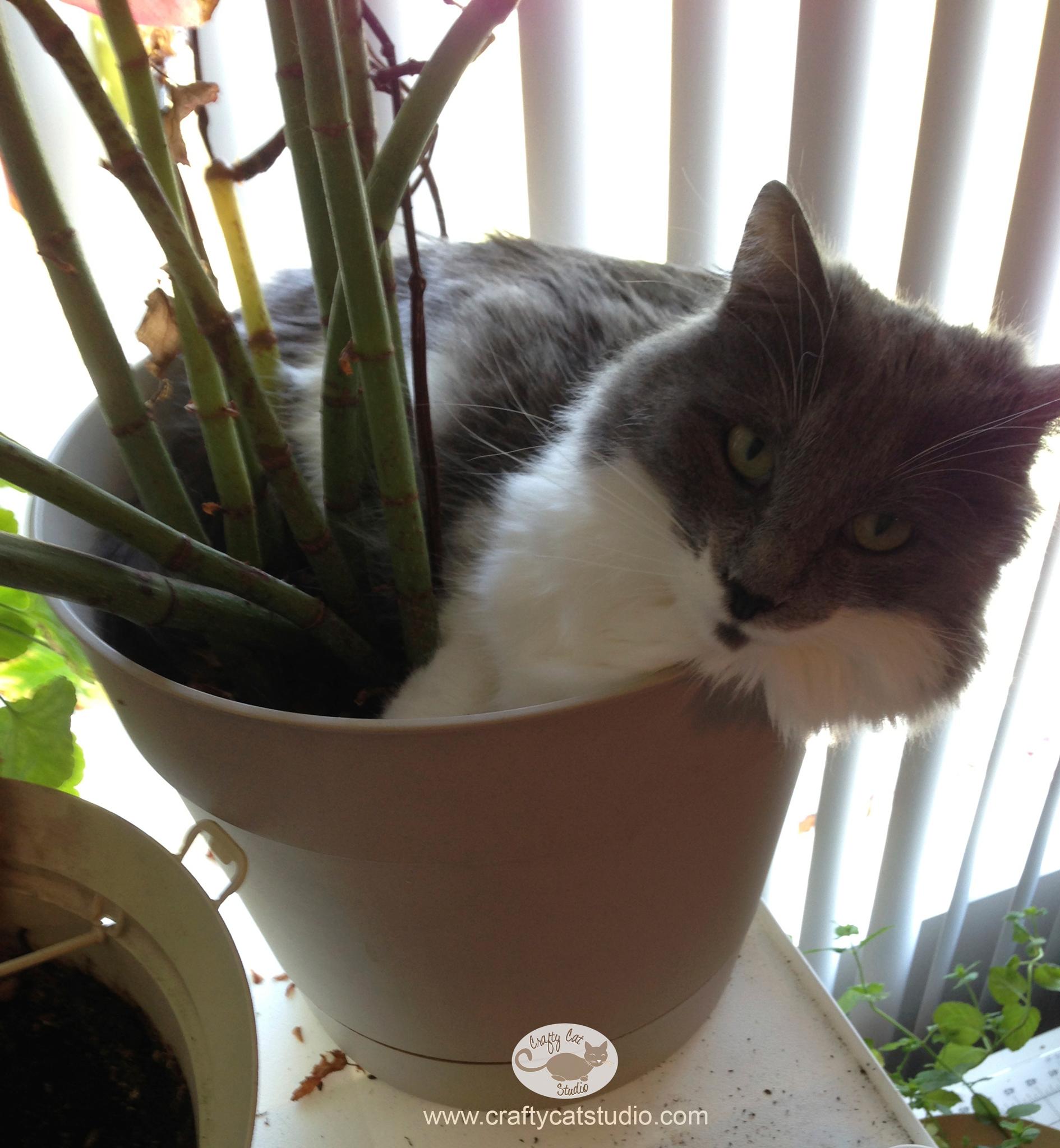 wesley in my begonia