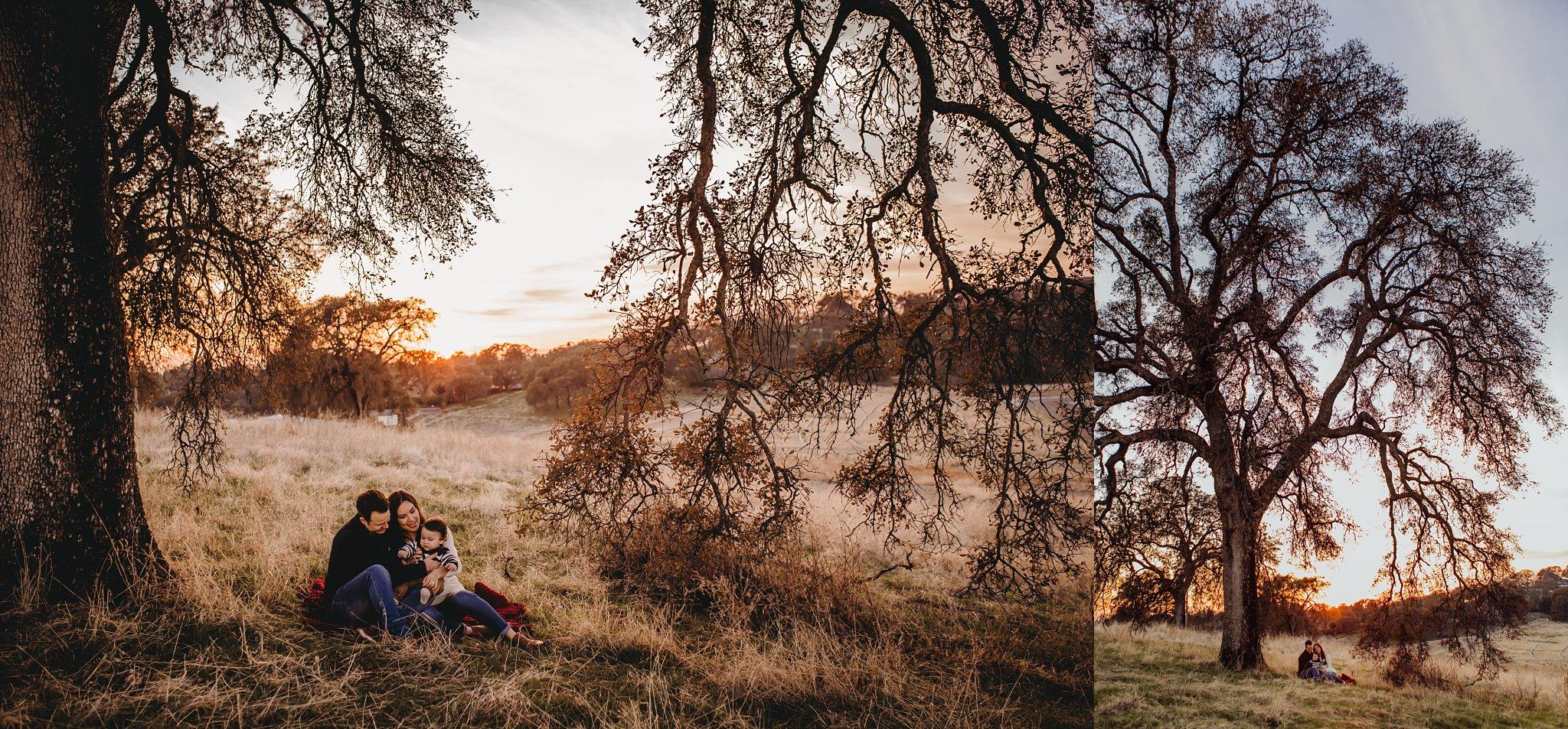 Family photo session, family sitting under tree, sunset, Becci Ravera Photography
